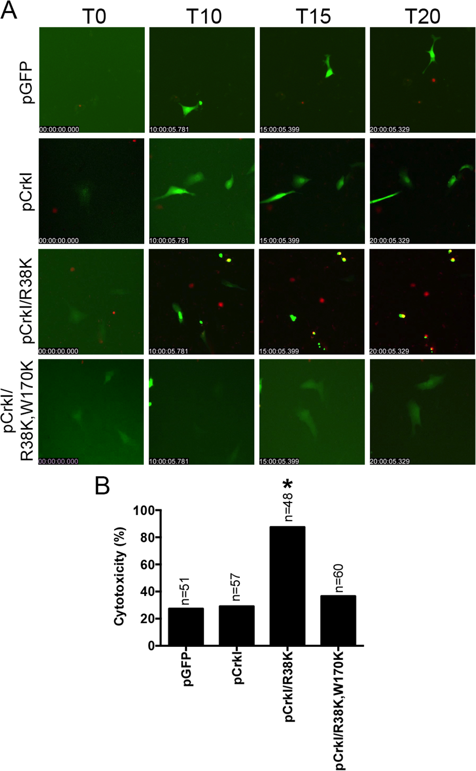CrkI/R38K induces cytotoxicity in Crk<sup>-/-</sup> cells.
