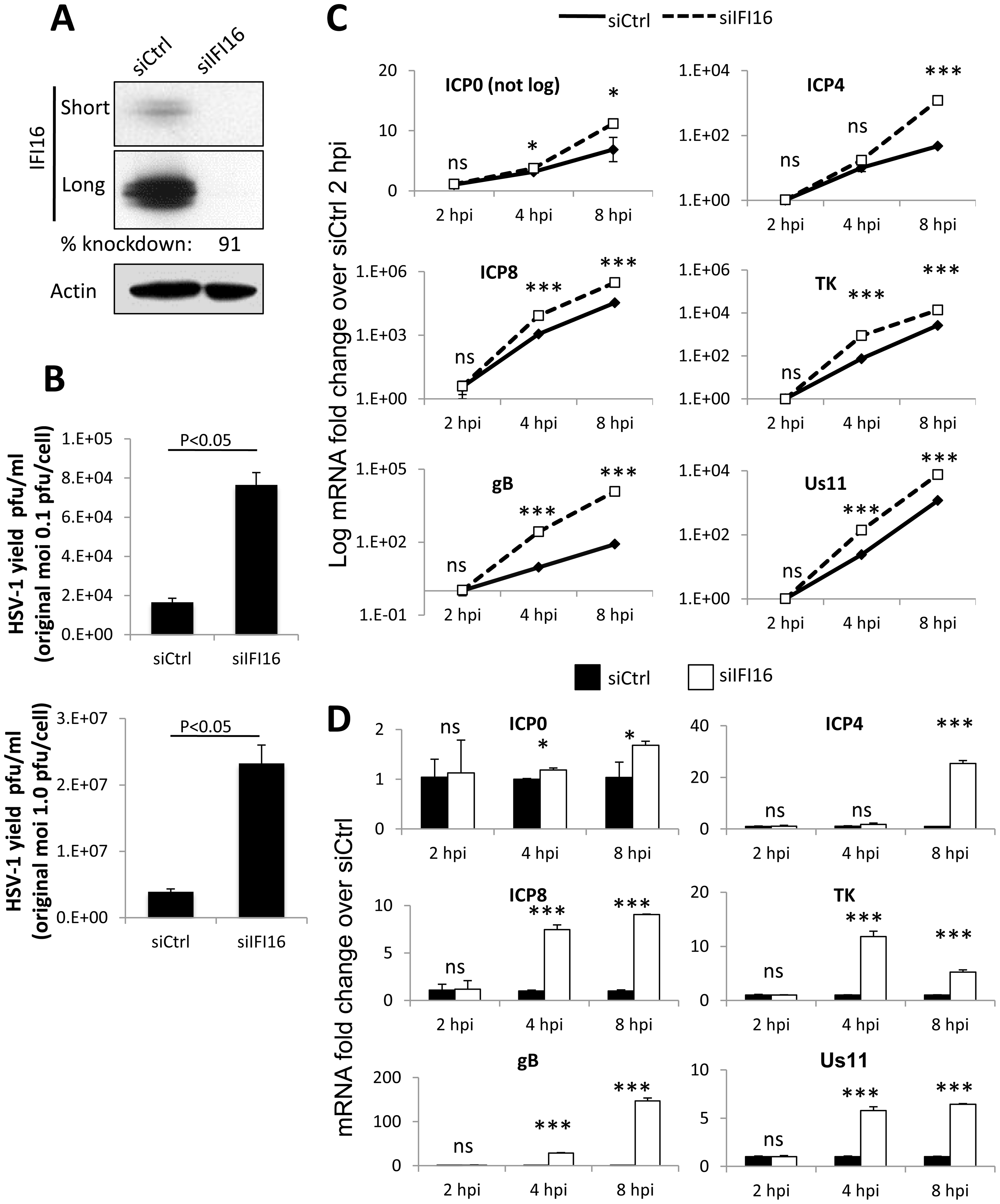 Effect of IFI16 depletion on HSV-1 gene expression, replication and viral yield.
