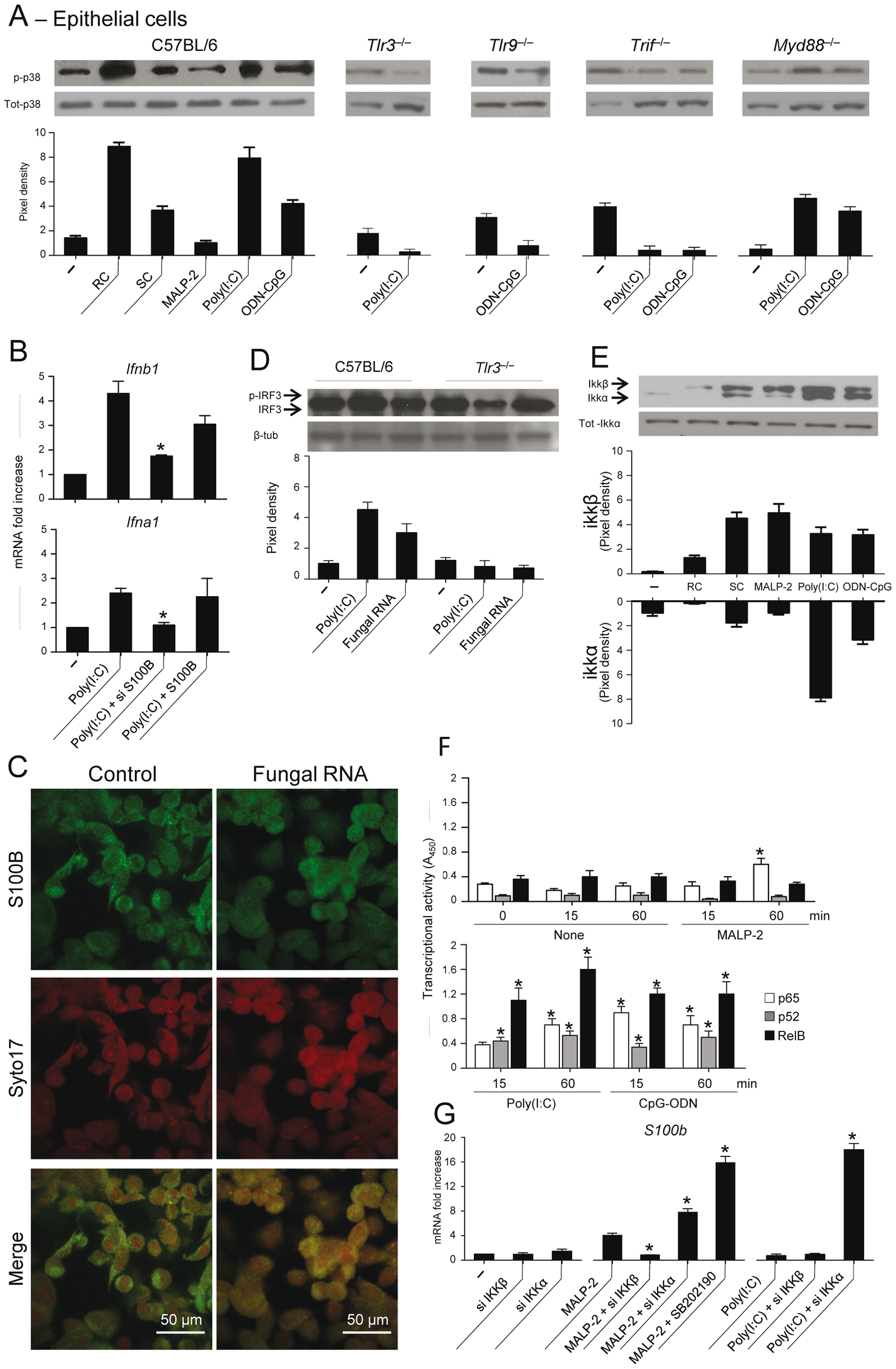 TLR3 and TLR9 inhibit <i>s100b</i> expression via TRIF/noncanonical NF–κB.