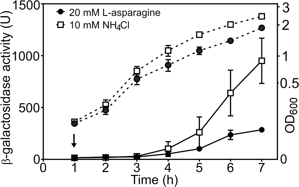 The <i>cae8</i> promoter is sensitive to the amino acid L-asparagine.