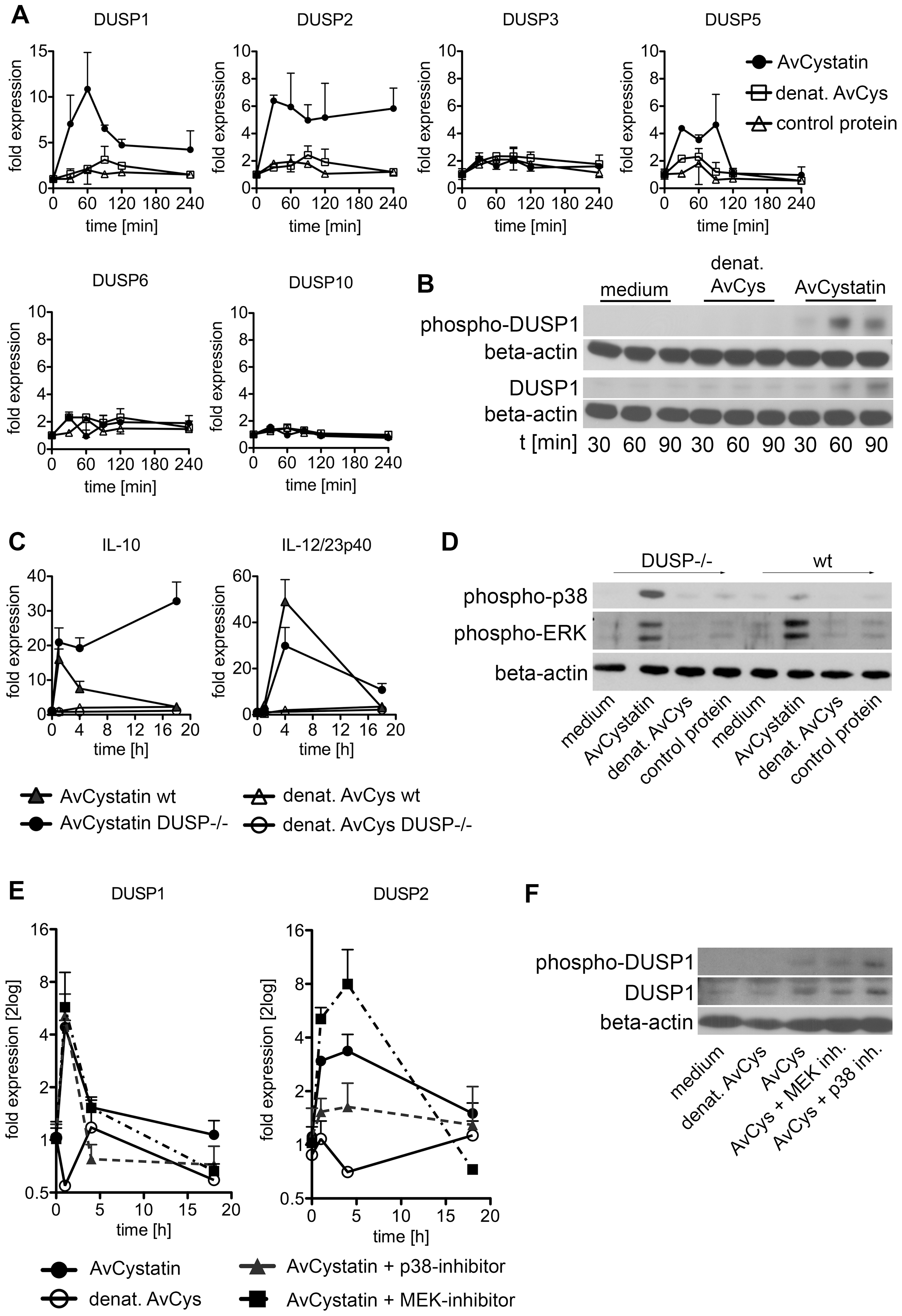Regulated expression of DUSP1 and DUSP2 in macrophages by AvCystatin.