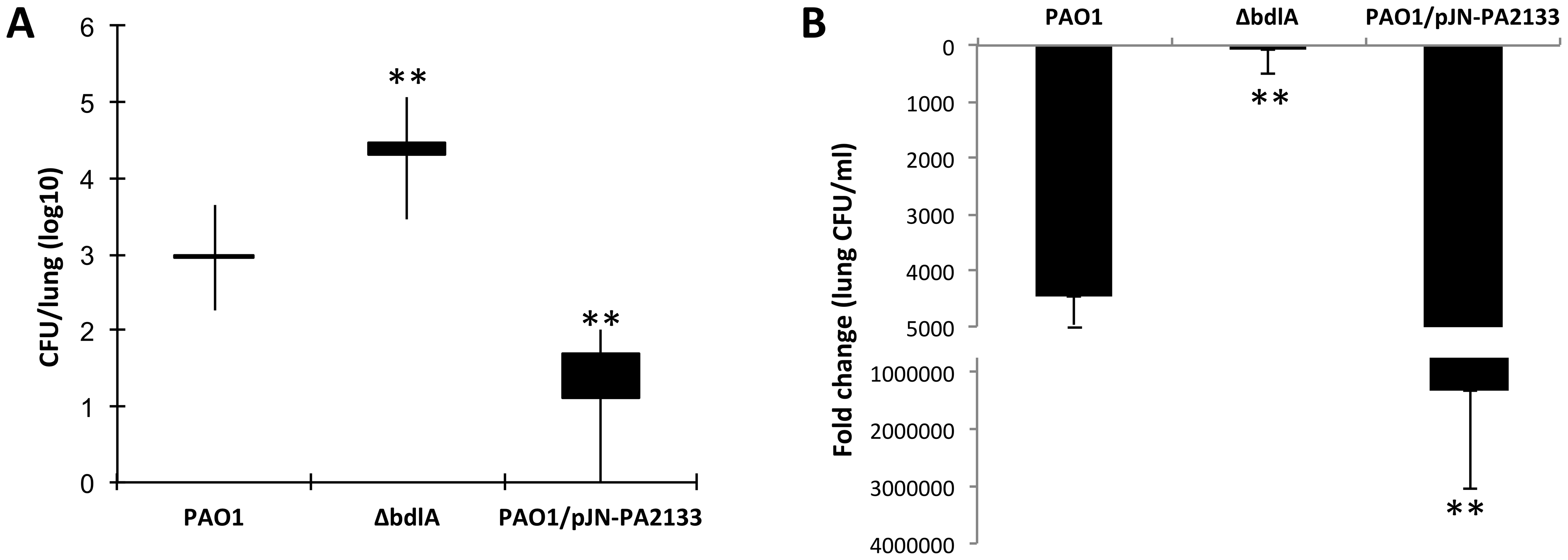 Impaired dispersion correlates with increased persistence as determined using a chronic murine pneumonia infection model.