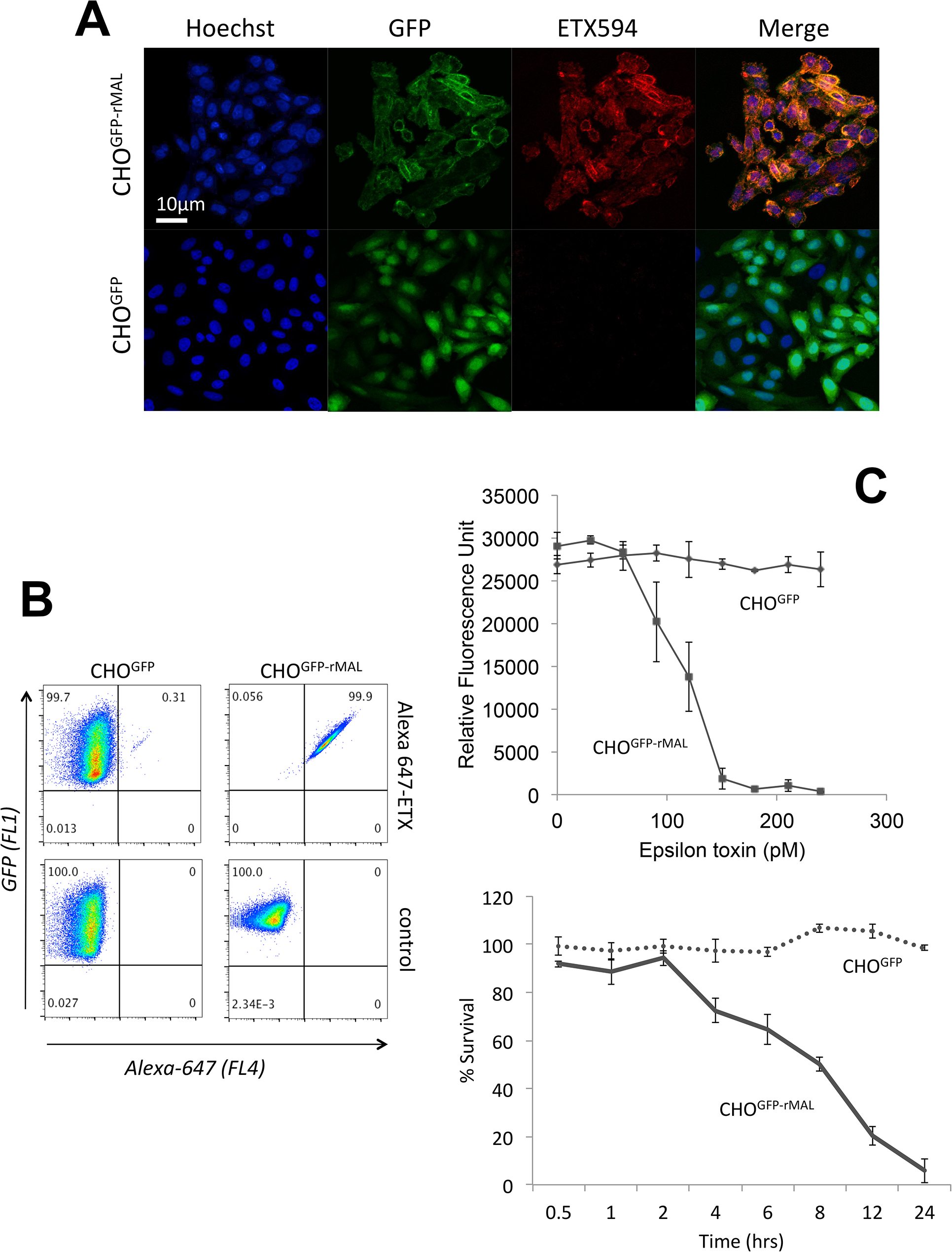 MAL expression in CHO cells is required to confer specific binding of ETX.