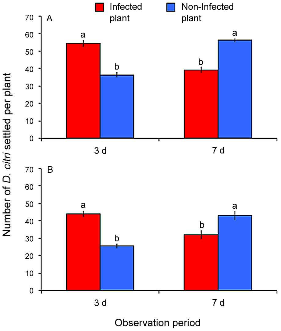 Settling preference of combined non-infected and Las-infected <i>D. citri</i> on Las-infected versus non-infected citrus plants.