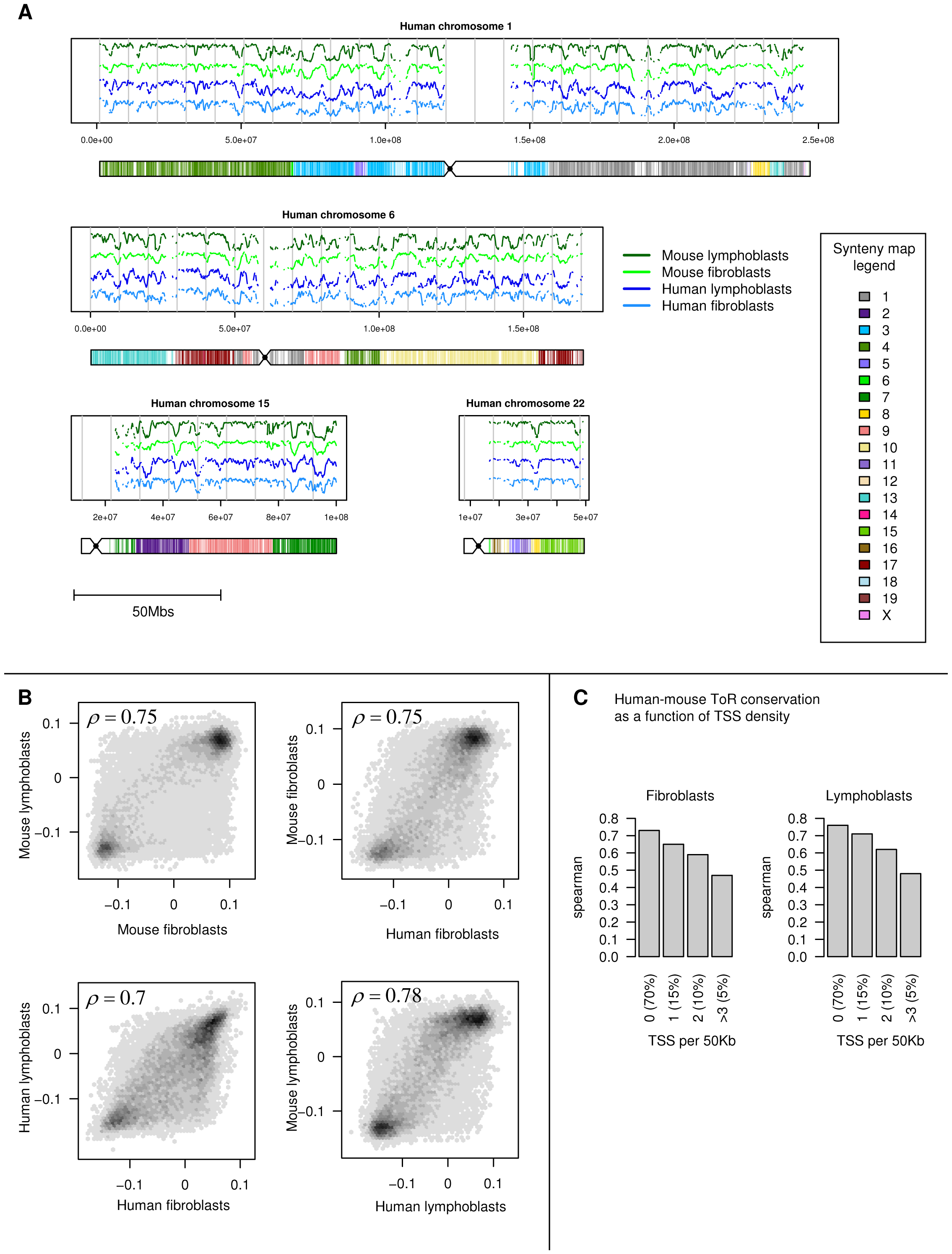 Conservation of time of replication in human and mouse cells.