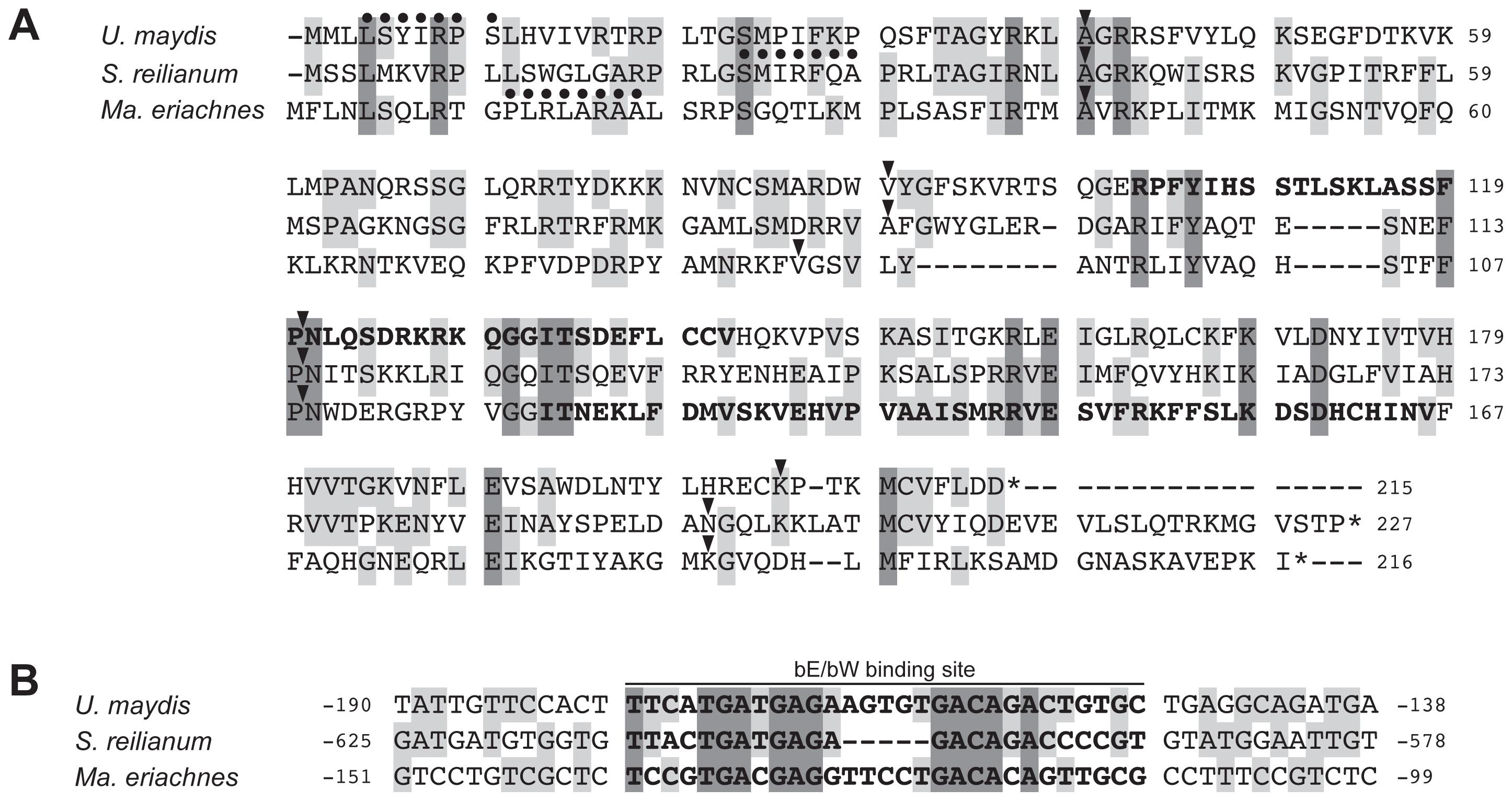Multiple alignment of Lga2 homologs and their regulatory regions.
