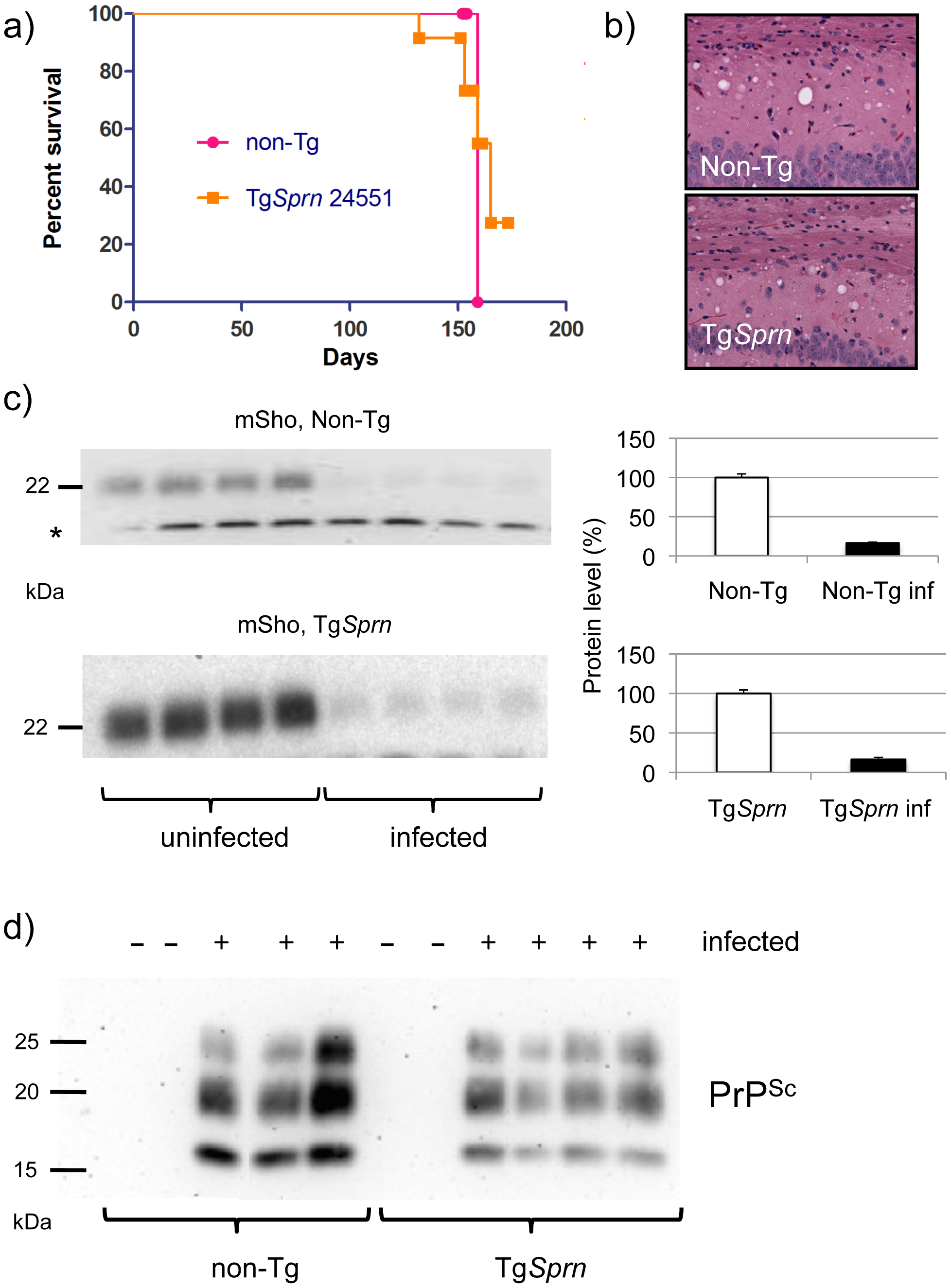 Prion infection assessed in Tg<i>Sprn</i> mice.