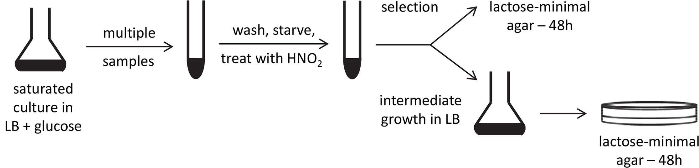 Experimental scheme.