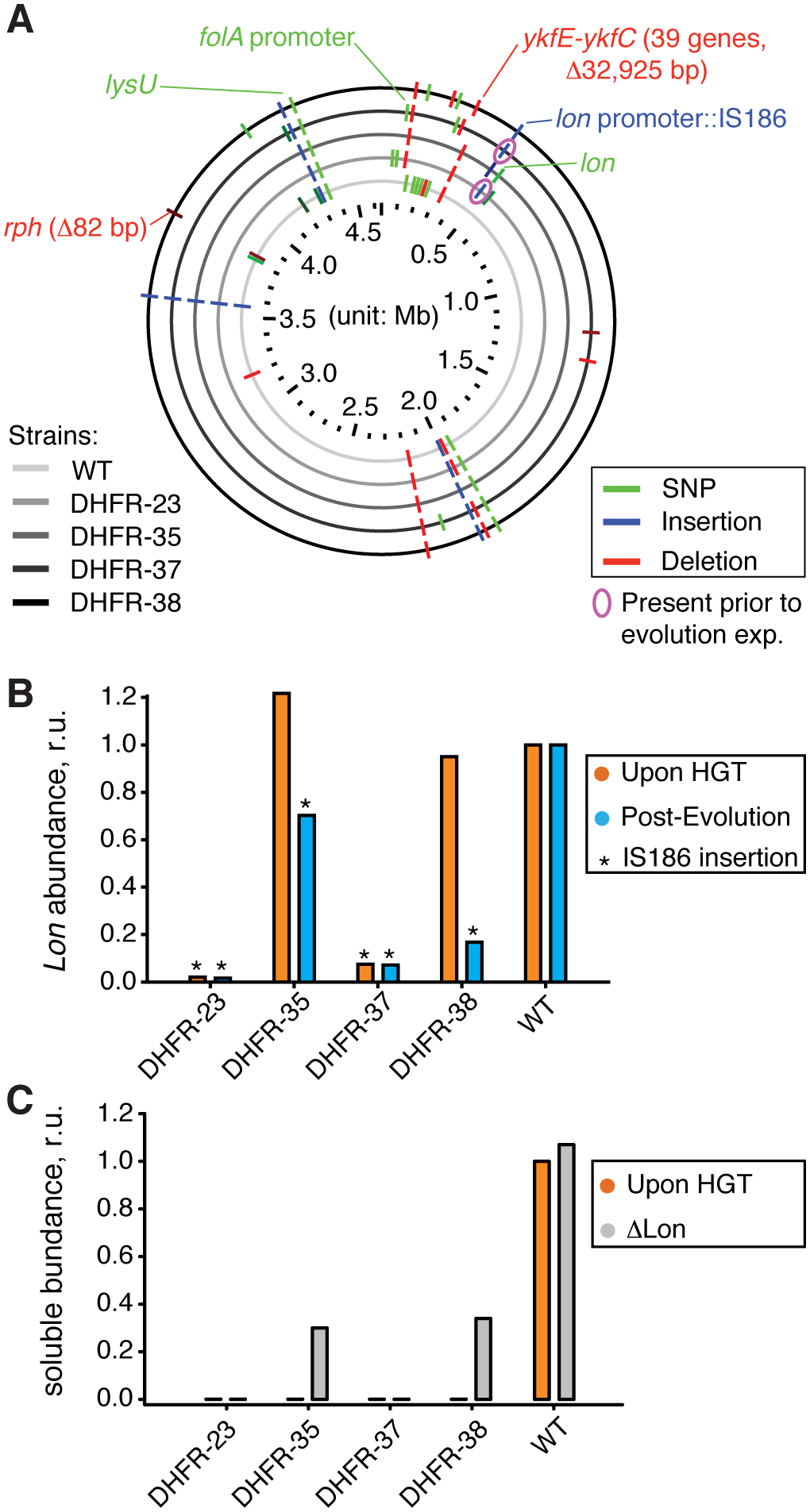 Sequencing of the orthologous strains.