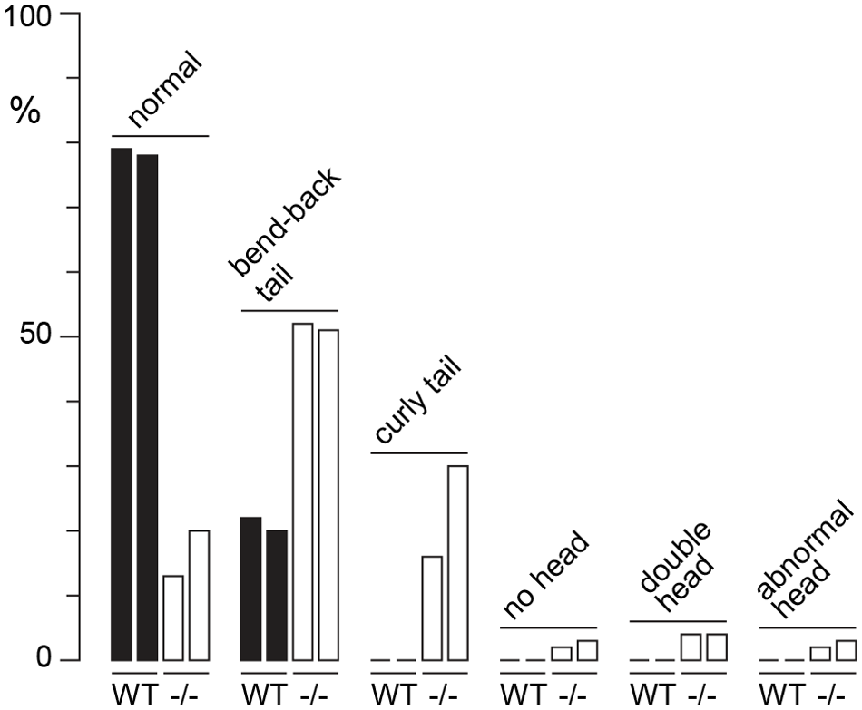 Sperm defects in <i>H3f3a</i> mutants.