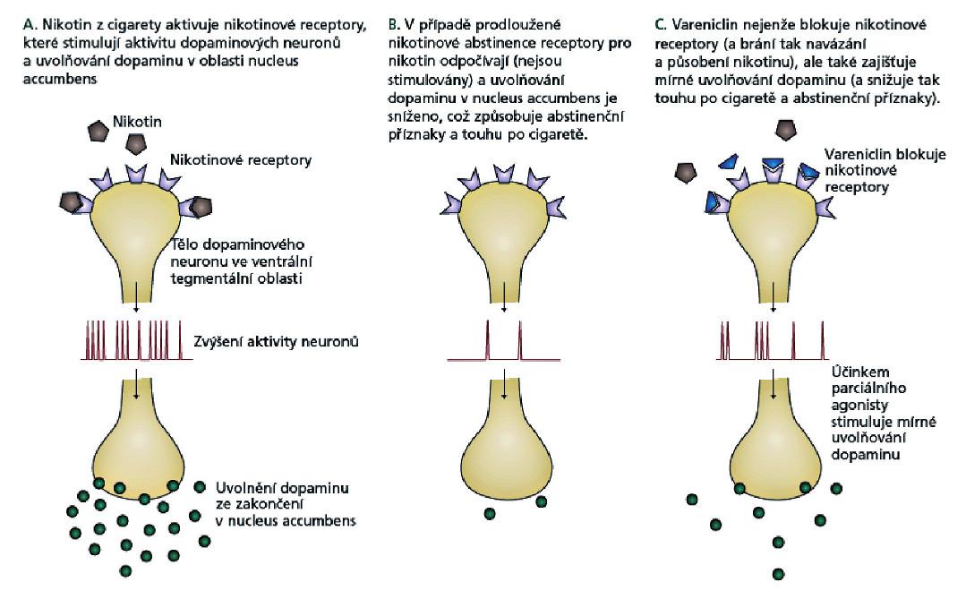 Mechanismus účinku vareniclinu při odvykání kouření