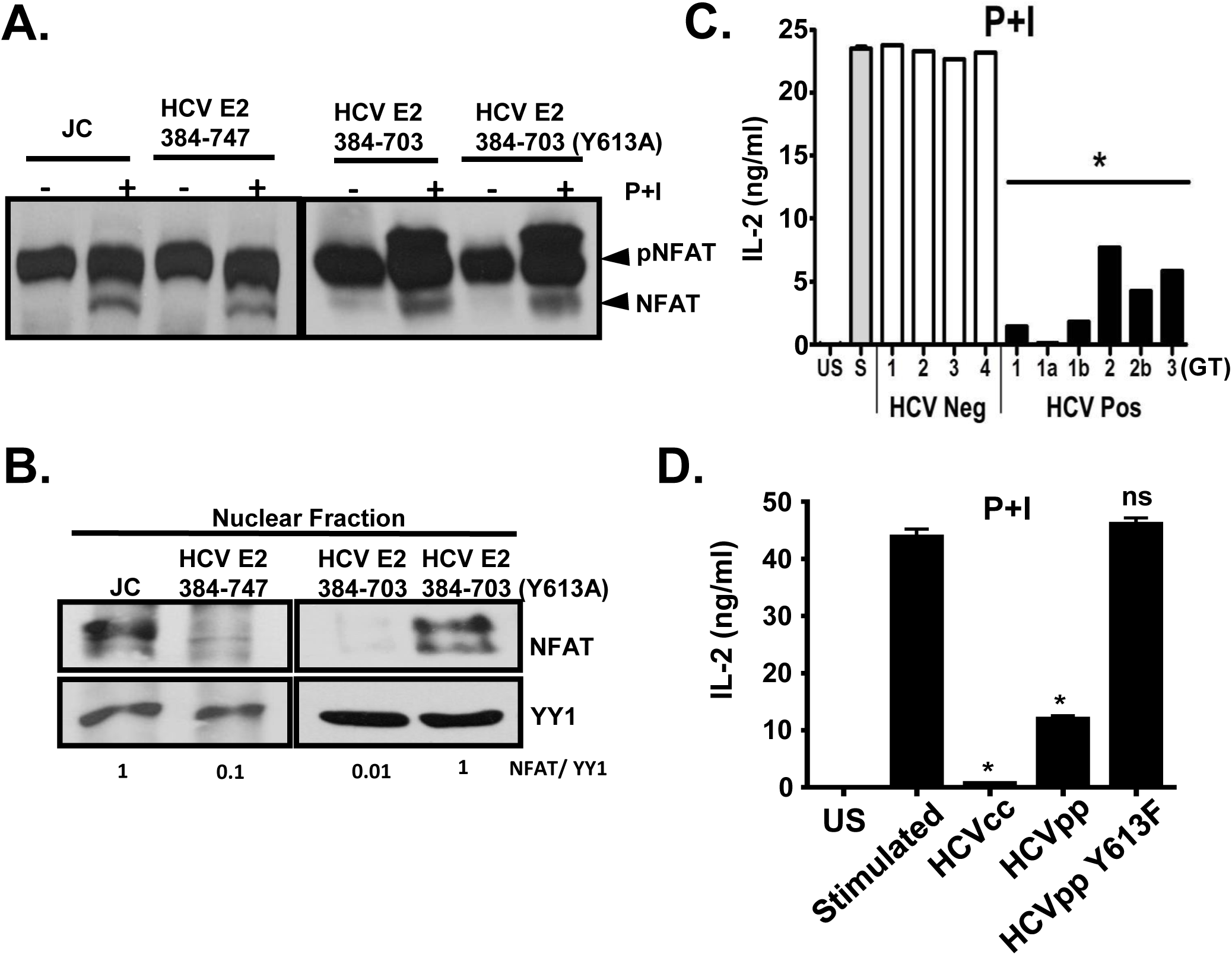 HCV E2 protein inhibits NFAT nuclear translocation.