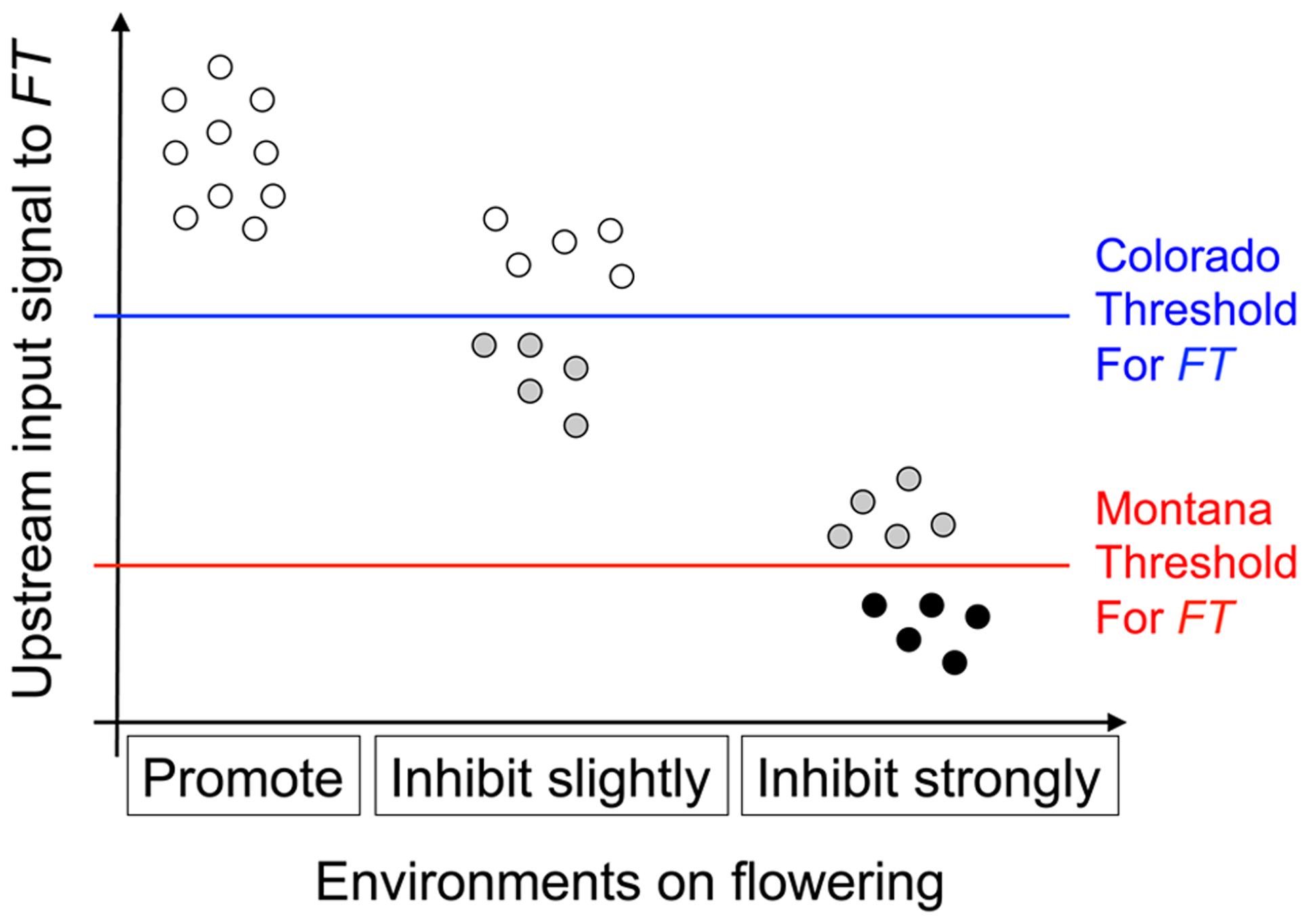 Illustration of the threshold hypothesis, proposing that <i>nFT</i>'s reversible canalization effect results from the interaction among <i>FT</i> gene, genomic backgrounds, and environments.
