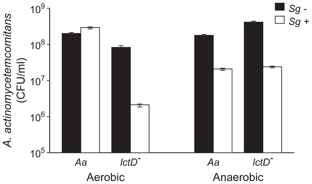Growth of <i>A. actinomycetemcomitans</i>, <i>A. actinomycetemcomitans lctD</i><sup>-</sup>, and <i>S. gordonii</i> in aerobic and anaerobic co-cultures.