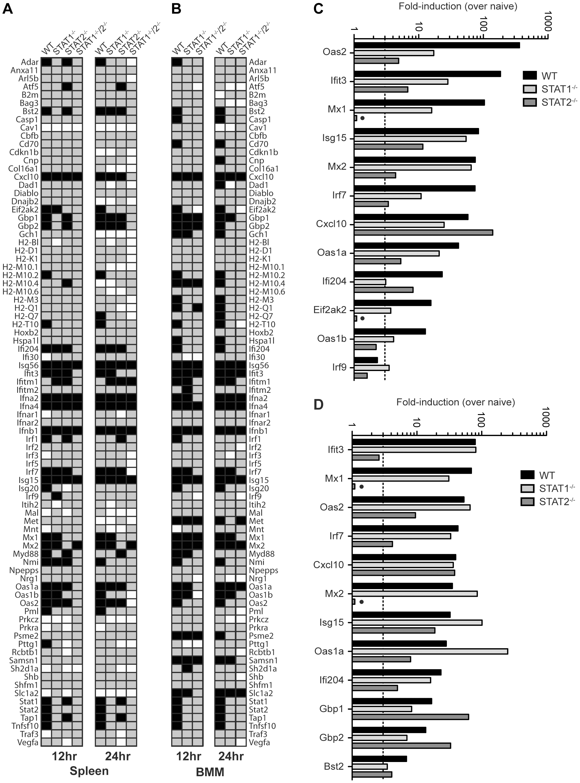 Comparison of ISG Induction in DENV-infected mice.