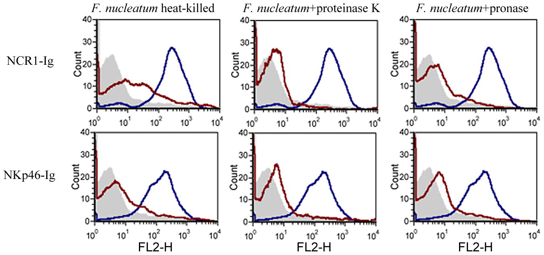 The <i>F. nucleatum</i> ligand is sensitive to heat, proteinase K and pronase treatment.
