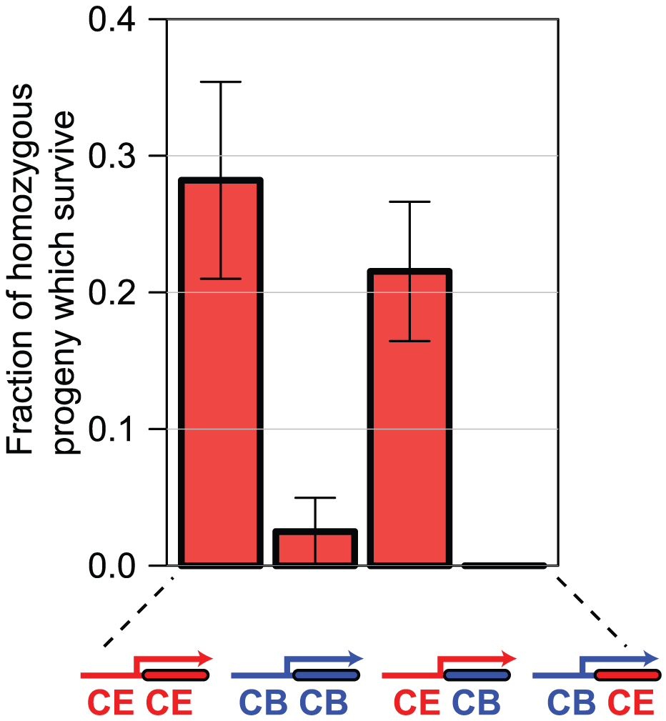 Differences in <i>sac-1</i> RNAi phenotype are due to differences in <i>sac-1</i> promoter function.