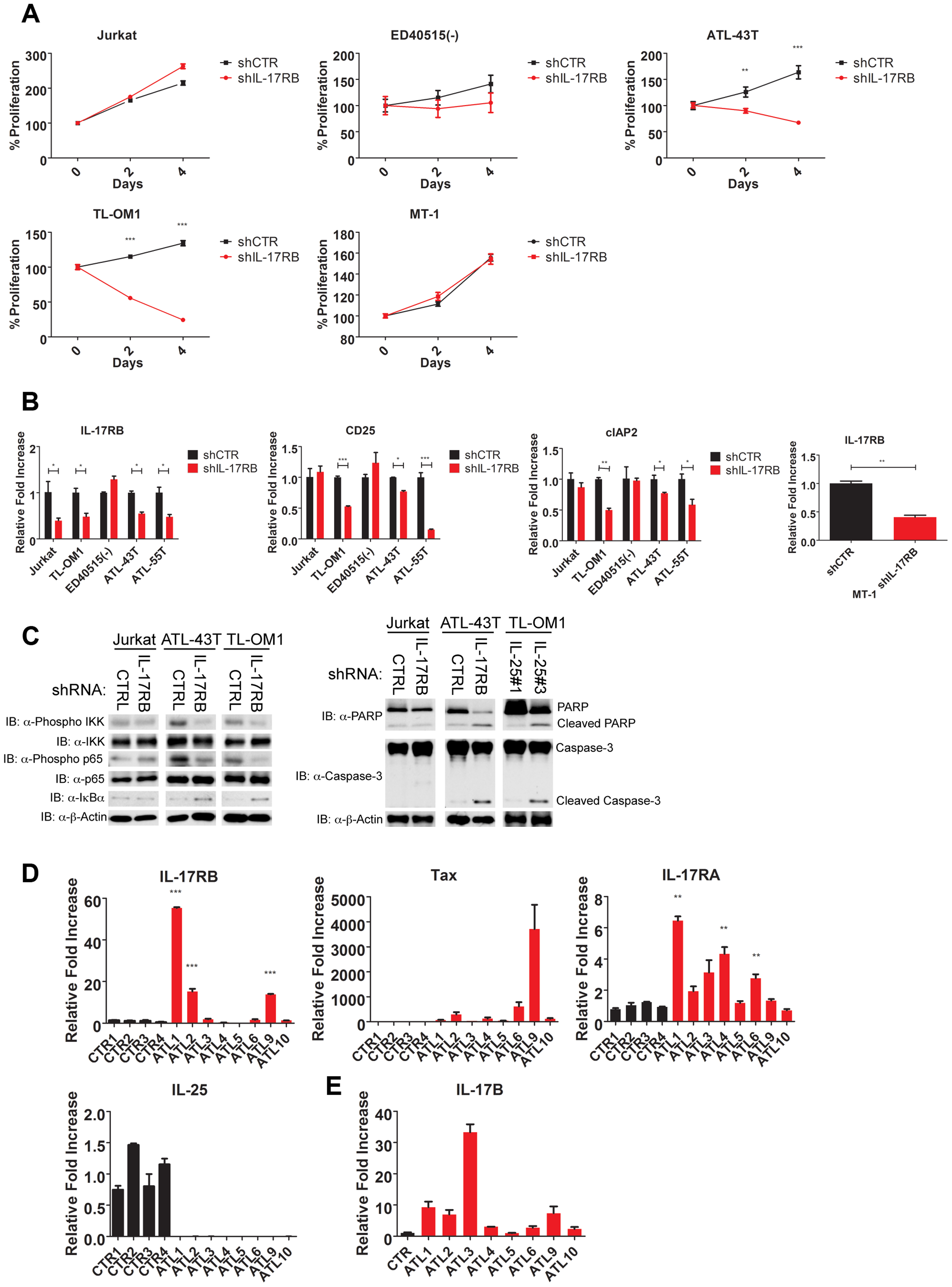IL-17RB is essential for NF-κB activation and survival in a subset of Tax-negative ATL cell lines.