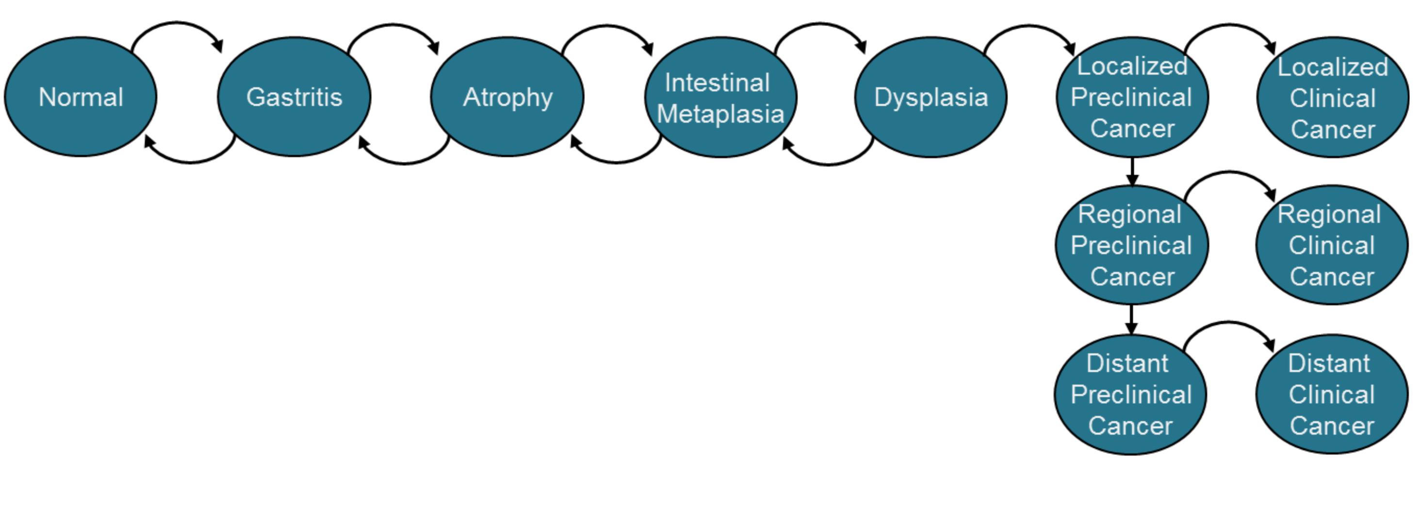 Intestinal-type NCGA model diagram.