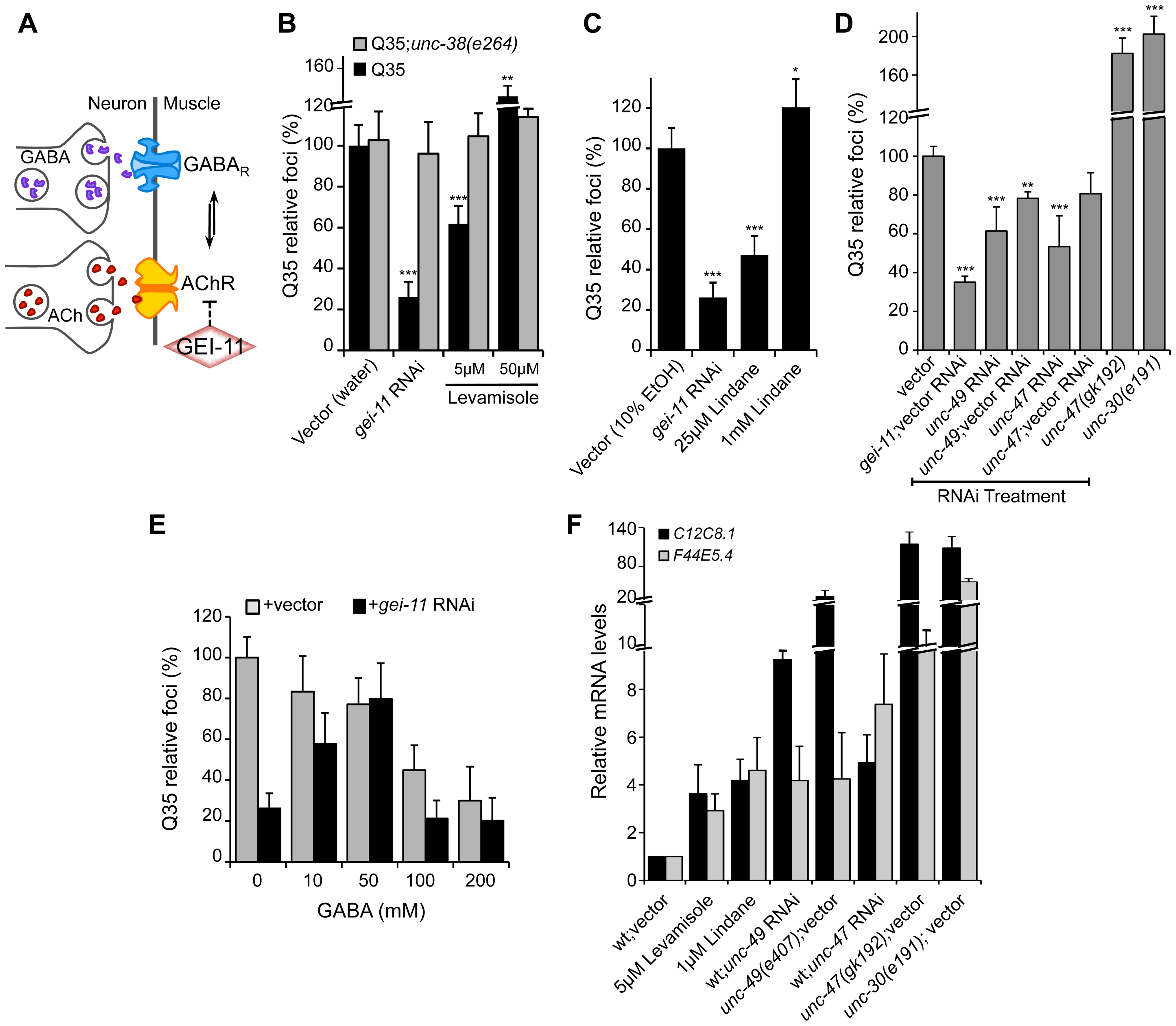 Modulation of AChR and GABA<sub>R</sub> can restore post-synaptic folding.