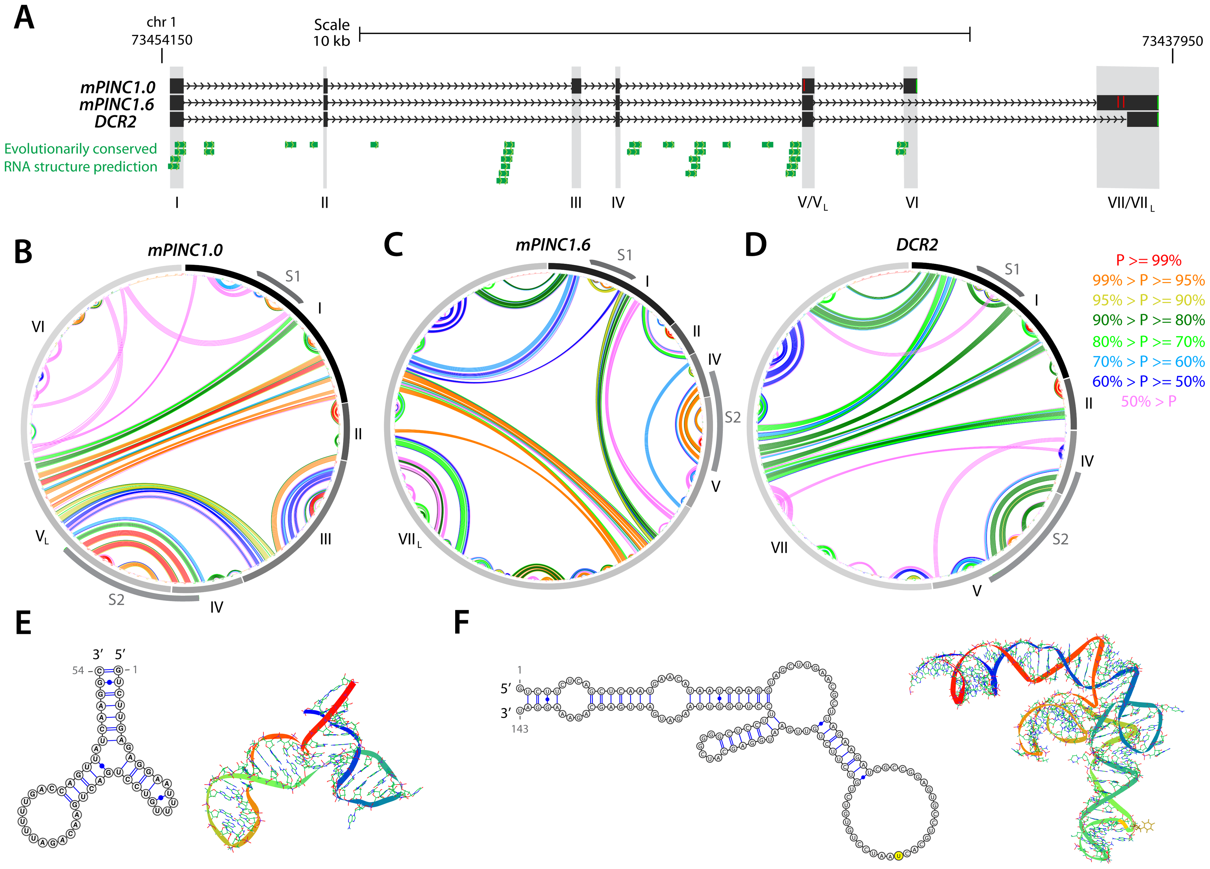 Structural analysis of the <i>PINC</i> locus.