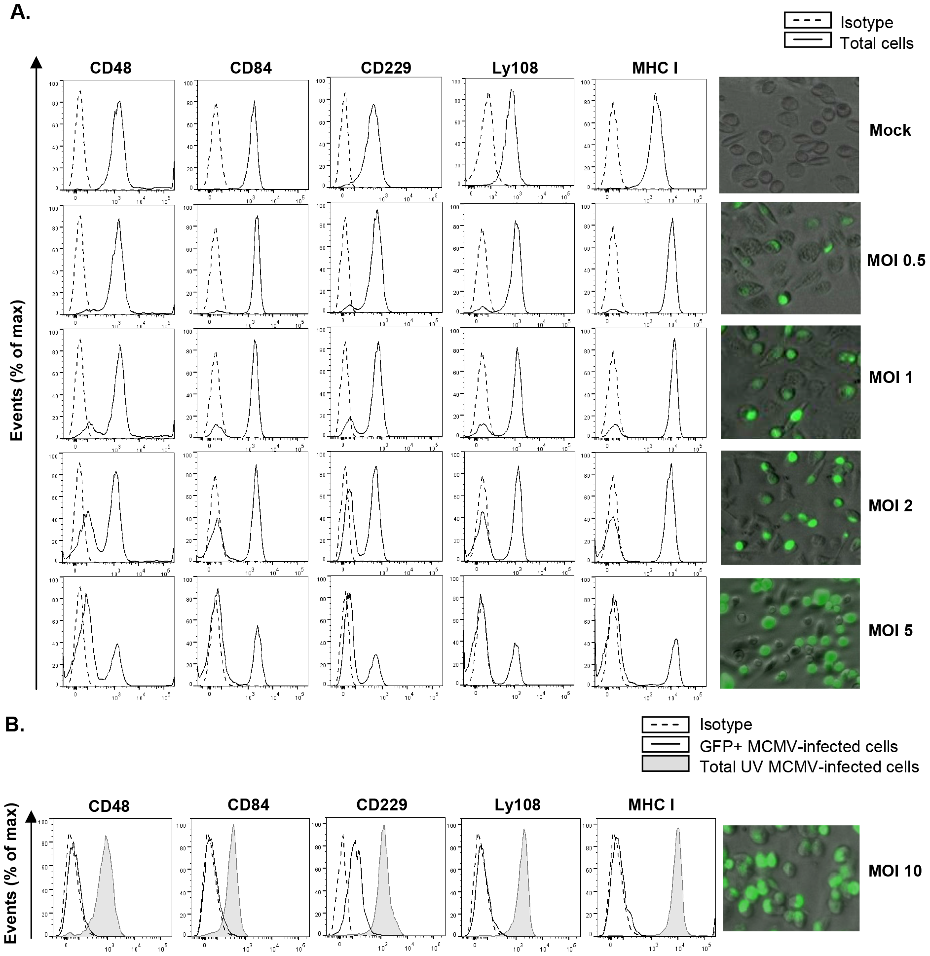 MCMV-induced downmodulation of SLAM receptors correlates with the extent of infection and depends on viral gene expression.