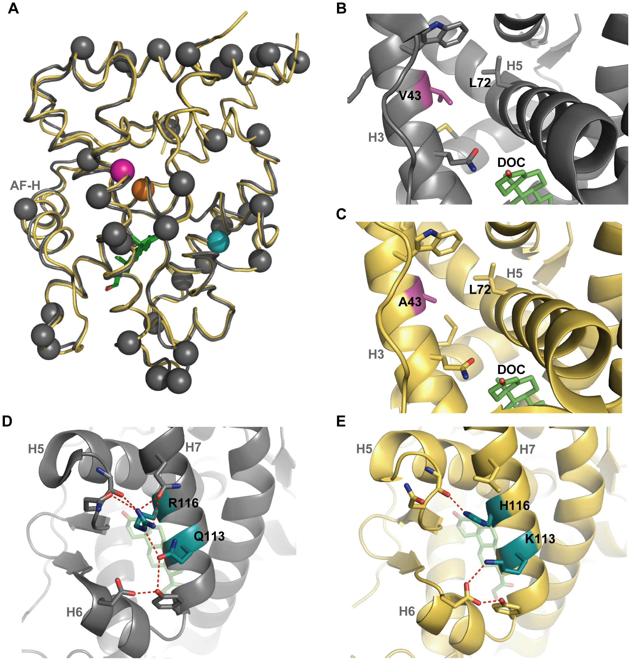 The crystal structure of AncGR1.1-LBD in complex with DOC (yellow, PDB 3RY9) compared to the previously solved structure of AncCR with DOC (gray, PDB 2Q3Y).