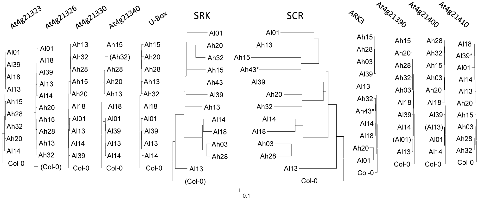 Gene phylogenies in and around the S-locus region.