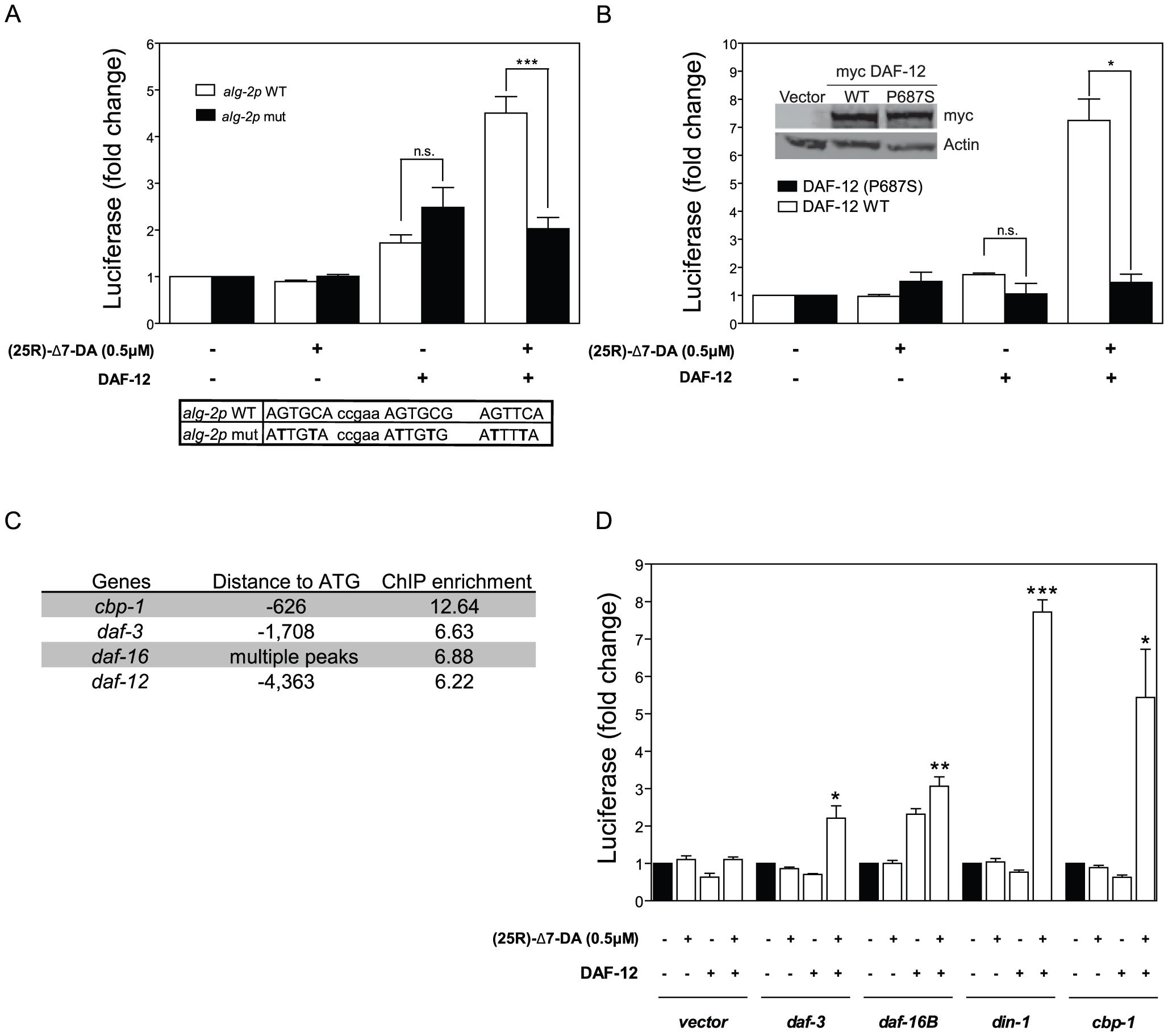 DAF-12 activates target genes in cells.