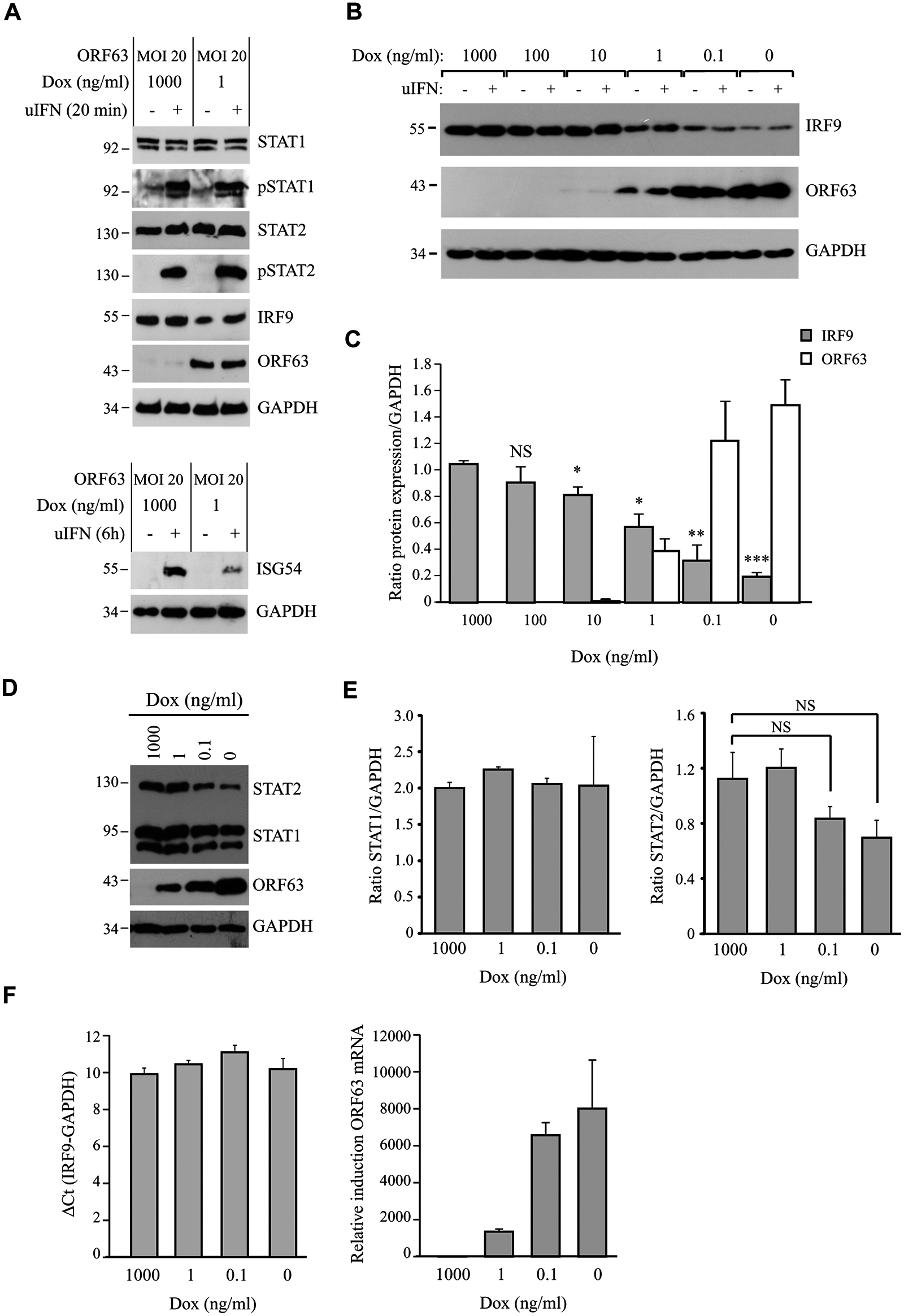 ORF63 does not affect STAT2 activation but promotes IRF9-degradation.