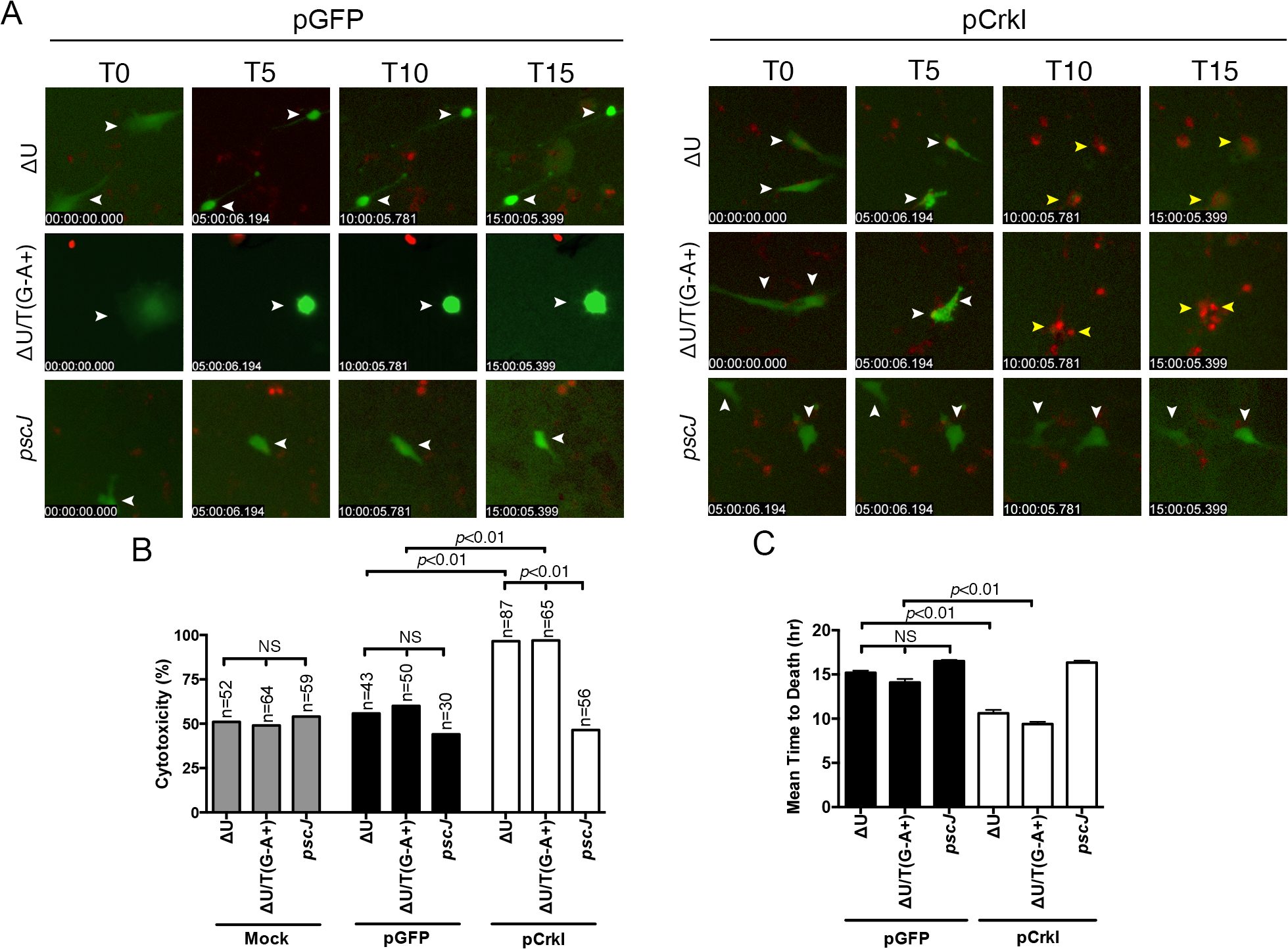 Crk mediates ExoT-induced apoptosis.