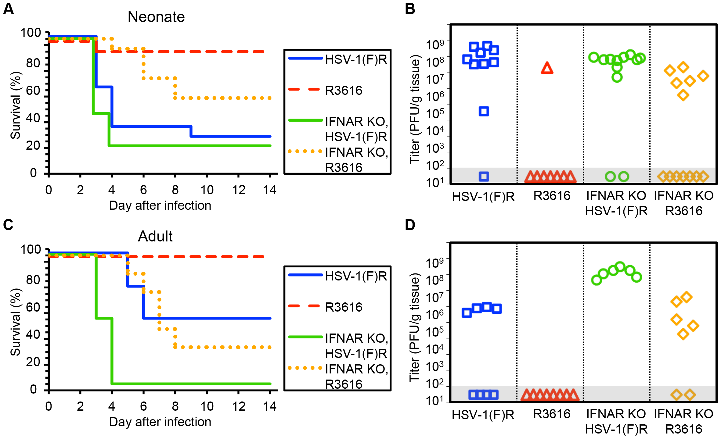 The HSV-1 F γ34.5 protein is important for mortality and viral replication in the CNS of both neonatal and adult mice.