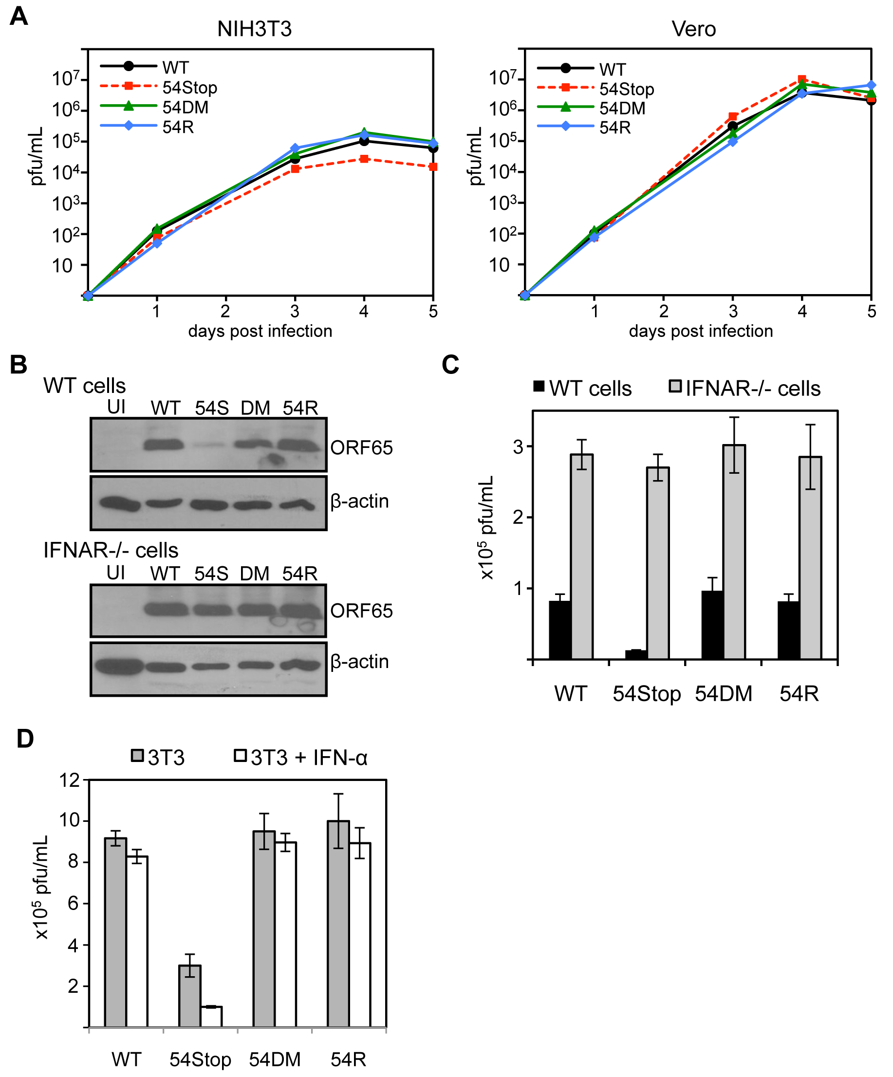 ORF54-null virus has a moderate defect in the presence of type I IFN signaling.
