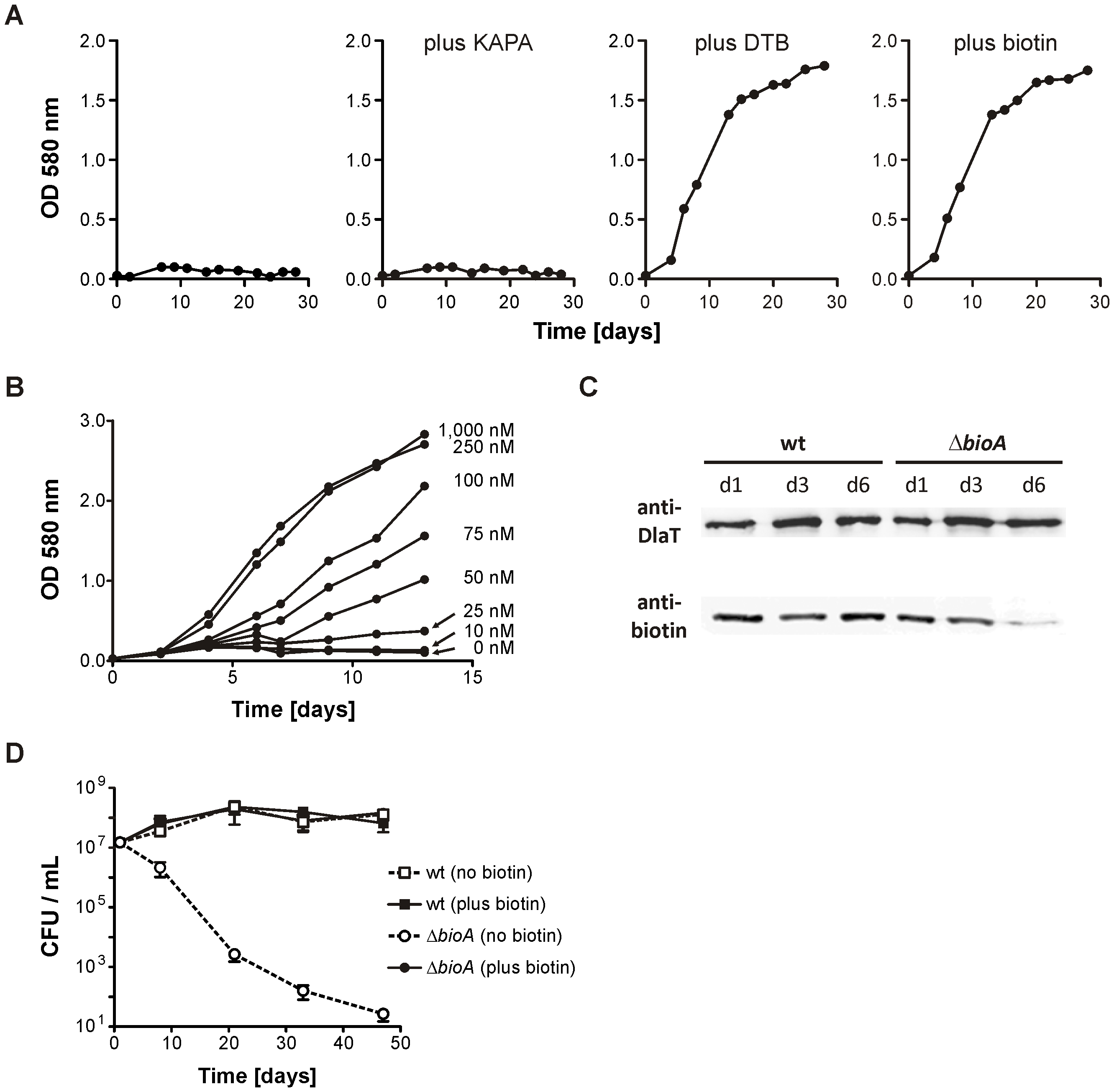 <i>In vitro</i> characterization of <i>Mtb ΔbioA</i>.