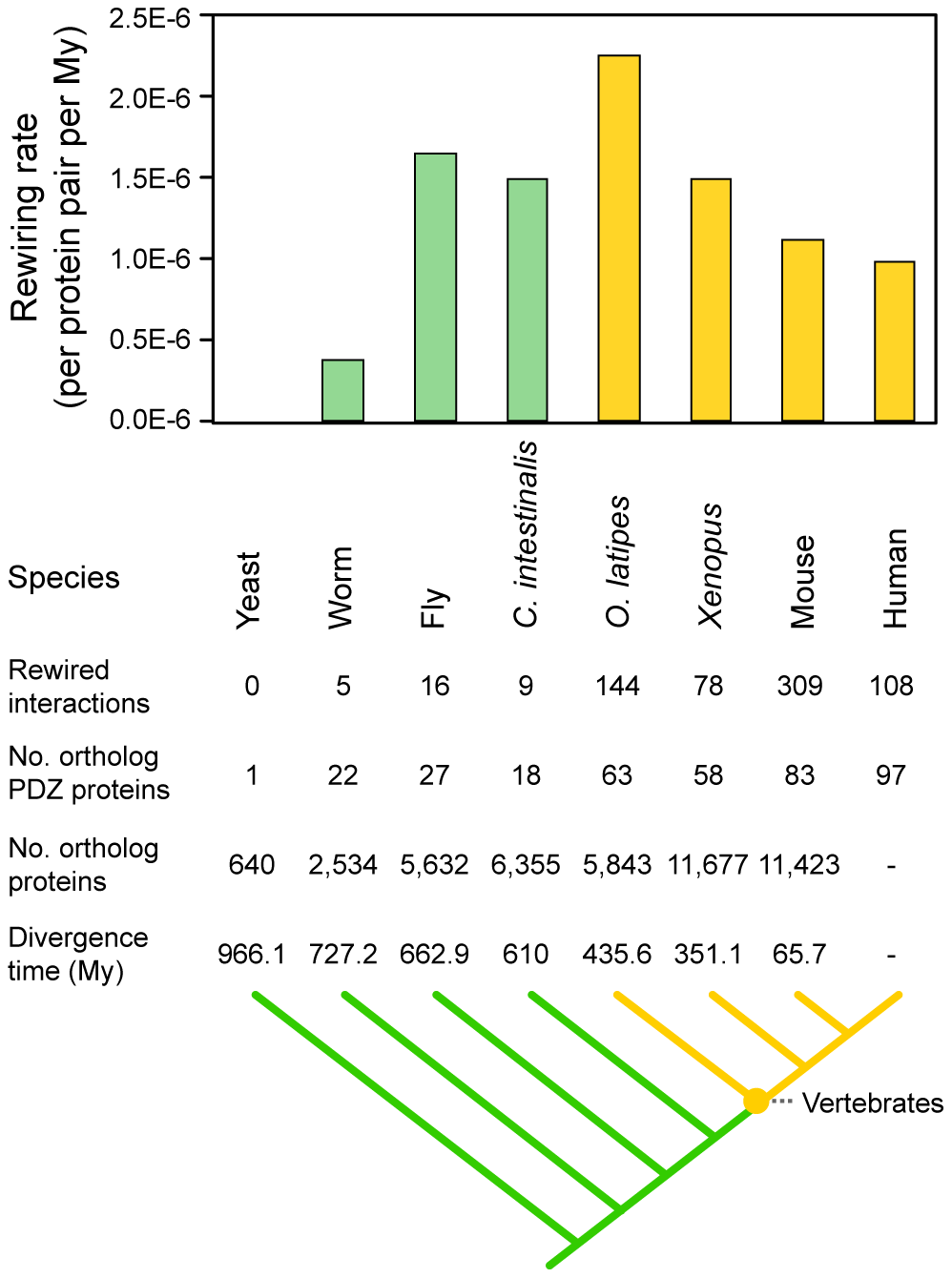 Rewiring rates of PDZ domain-ligand interactions throughout evolution.