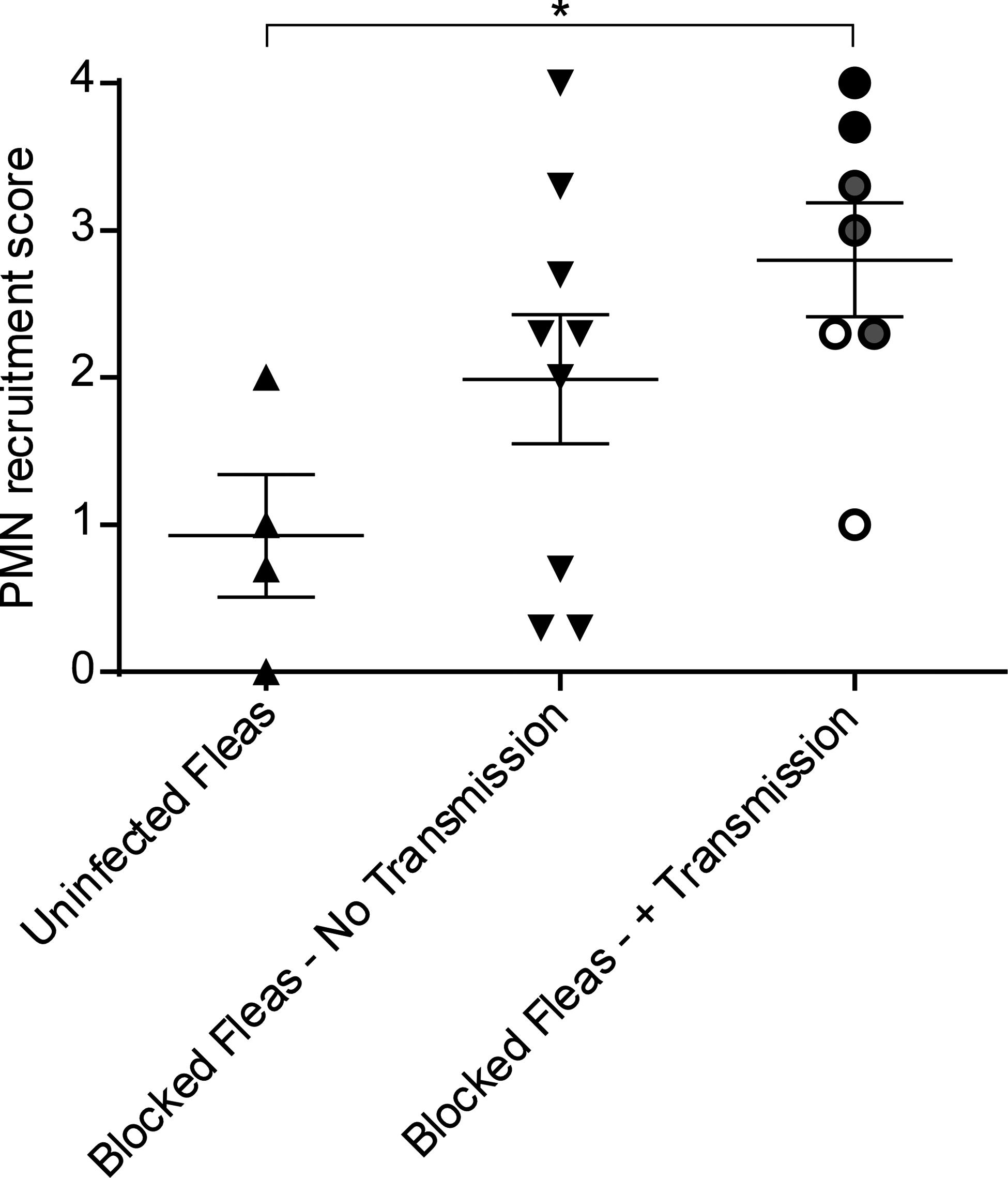 Scoring of neutrophil recruitment to uninfected flea bites, blocked flea bites without transmission and blocked flea bites that transmitted <i>Y</i>. <i>pestis</i>.