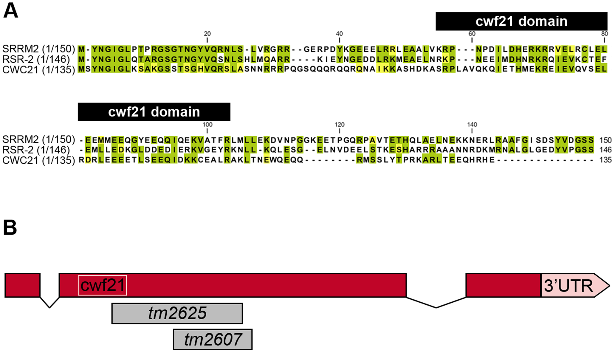 N-terminal conservation of RSR-2 and scheme of <i>rsr-2</i> gene.