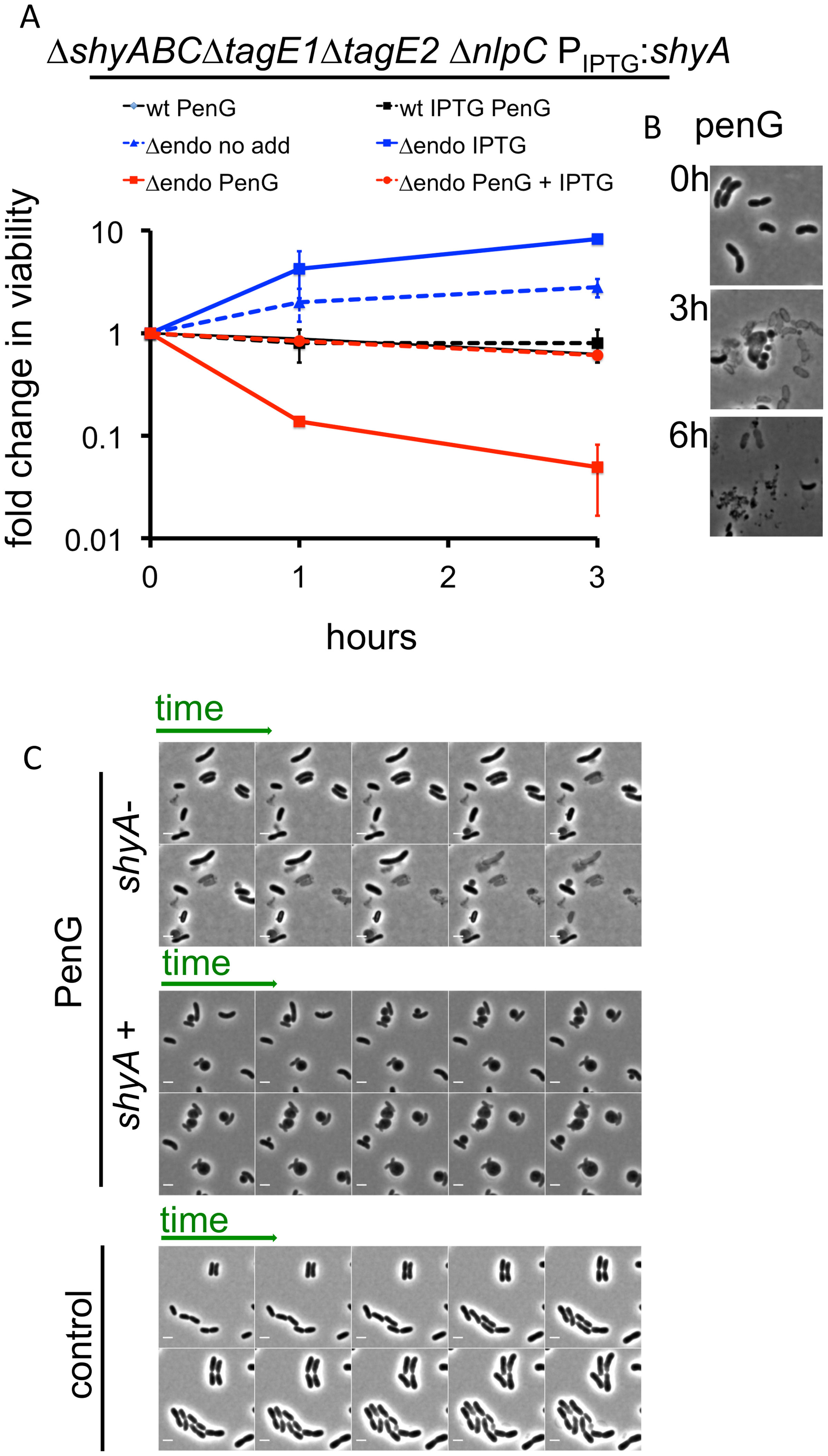 <i>V</i>. <i>cholerae</i> endopeptidase are required to prevent lysis in response to inhibition of cell wall synthesis.