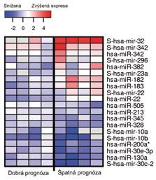 Skupina miRNA umožňující rozdělit pacienty s cRCC na skupiny s dobrou a špatnou prognózou. Červená a modrá barva znamená zvýšenou, resp. sníženou expresi dané miRNA ve srovnání s nenádorovou renální tkání. Předpona S znamená prekurzorovou formu dané miRNA. Upraveno podle Petilla et al [41].