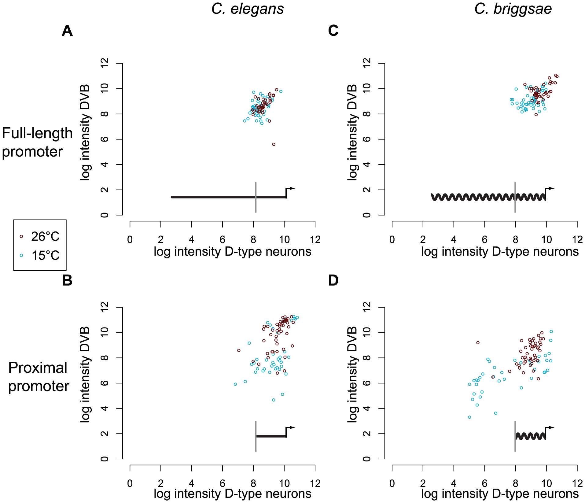 Only full-length promoters of <i>C. elegans</i> and <i>C. briggsae unc-47</i> can direct robust expression.