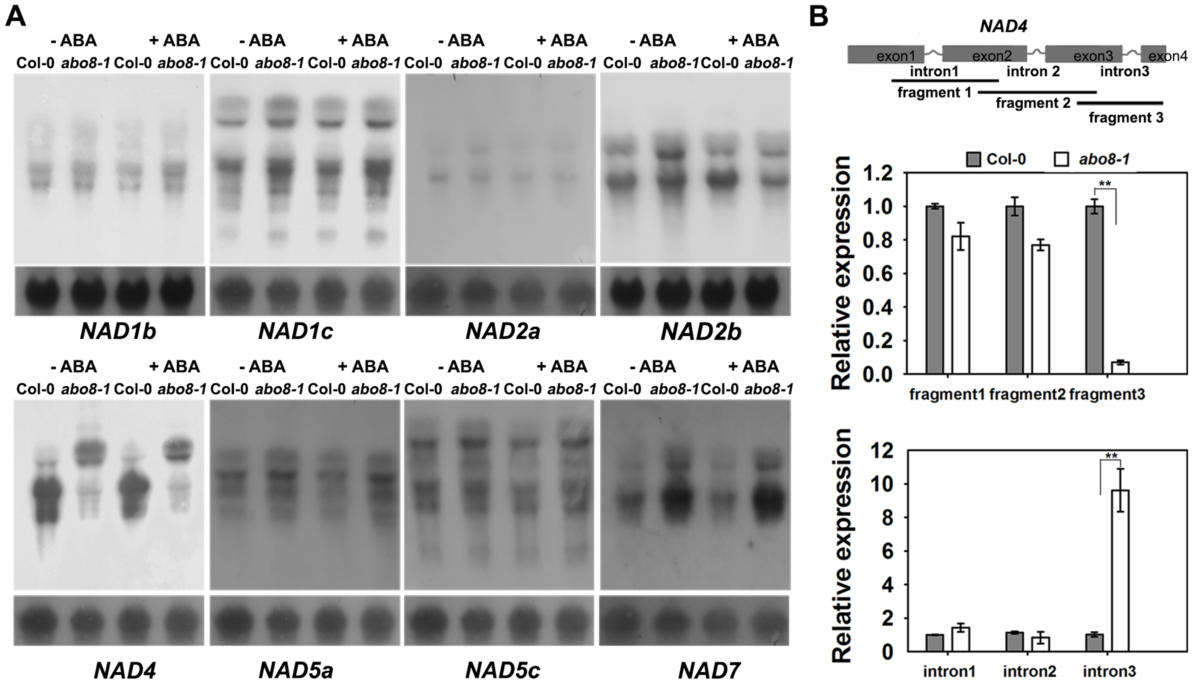 ABO8 regulates the splicing of <i>NAD4</i> intron 3.