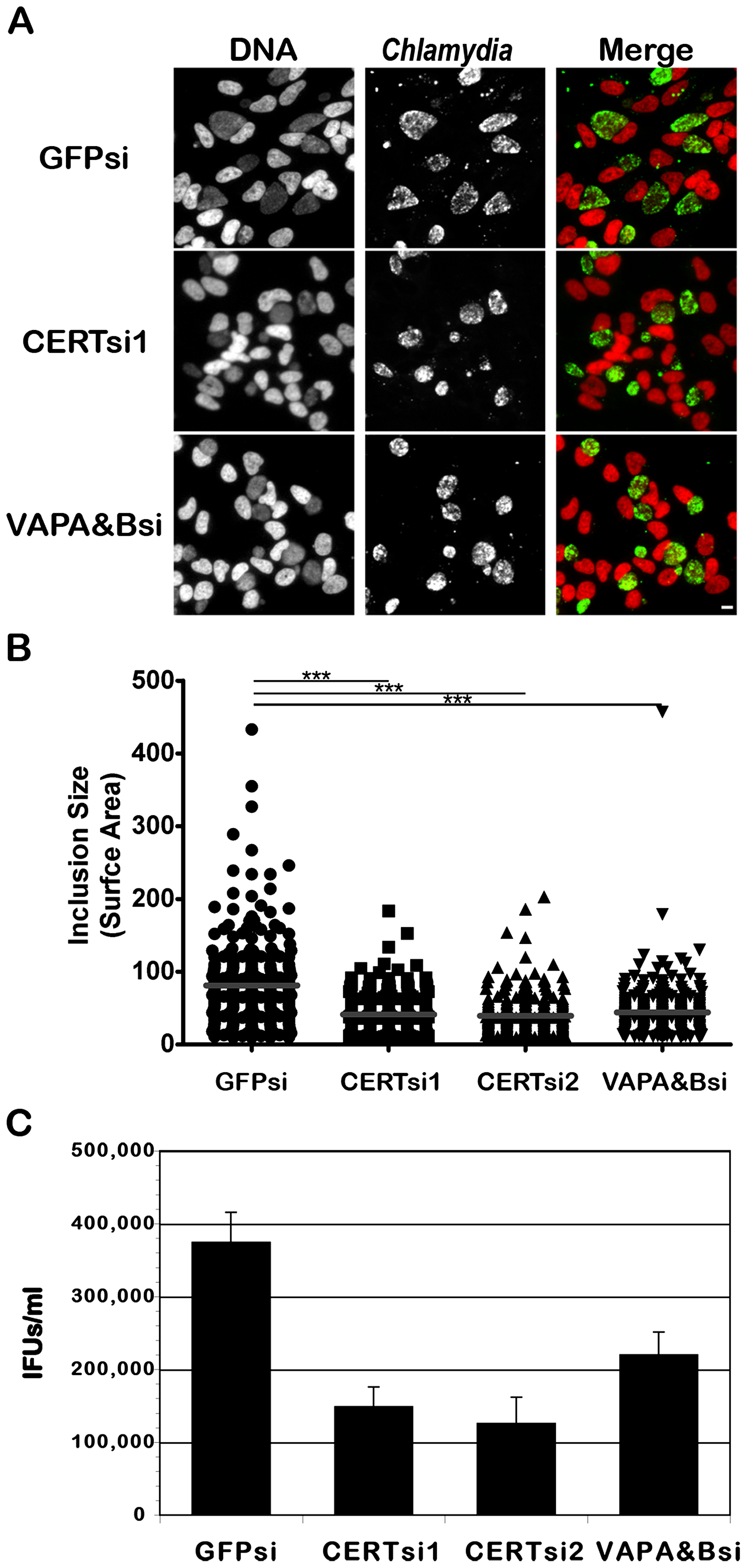 CERT and VAPA/B depletion impairs <i>C. trachomatis</i> inclusion development.