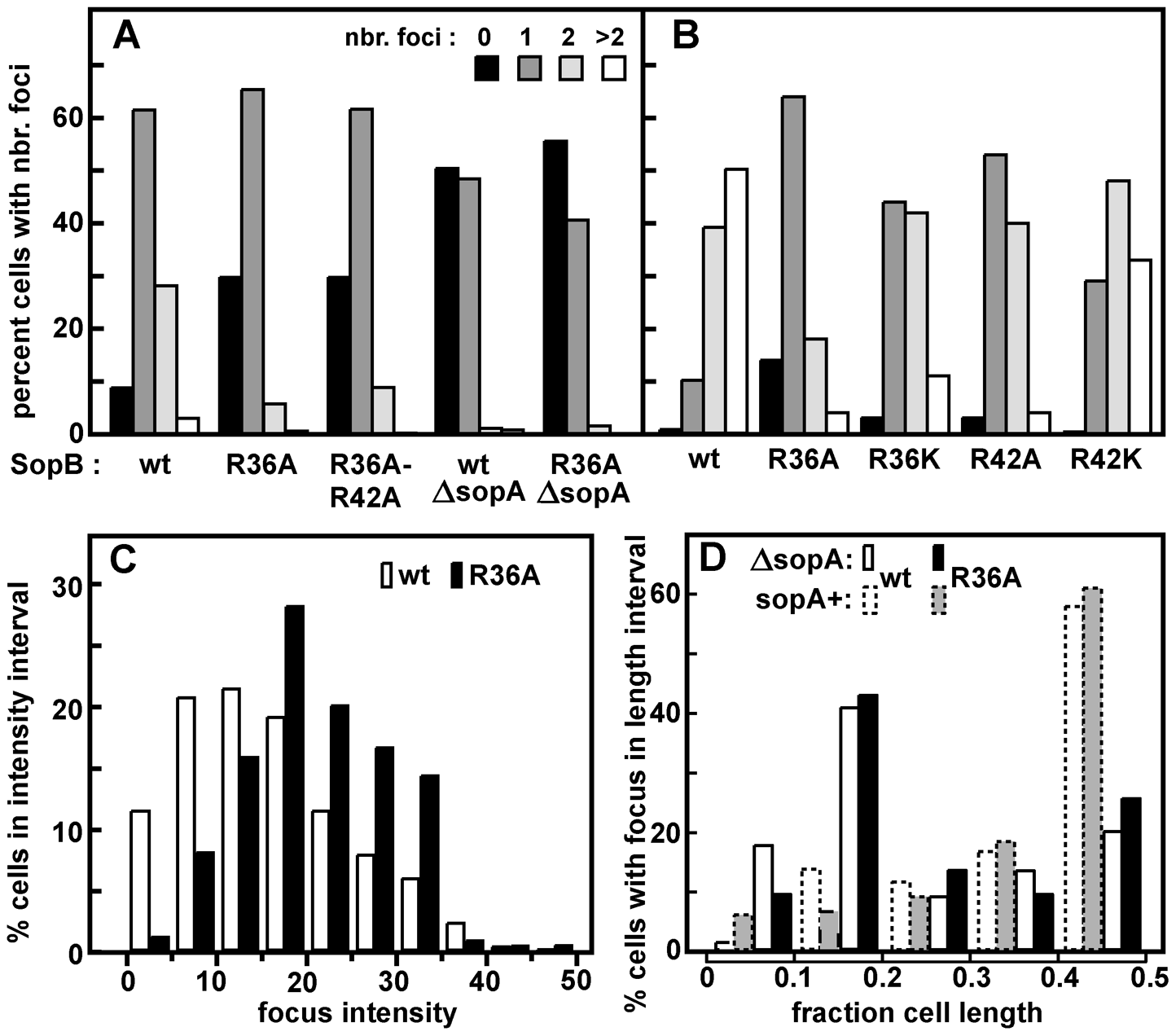 Effect of R36 and R42 mutations on mini-F clustering.