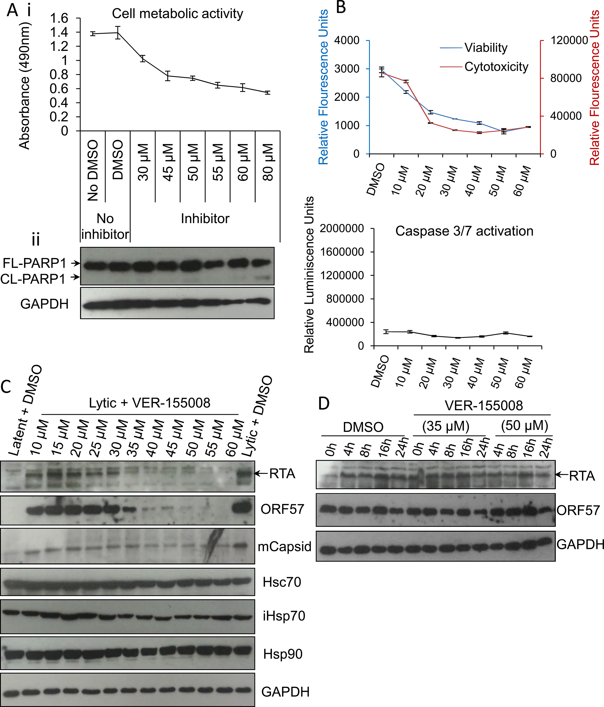 VER-155008 abrogated viral protein synthesis pre-translationally in HEK-293T rKSHV.219 cells.