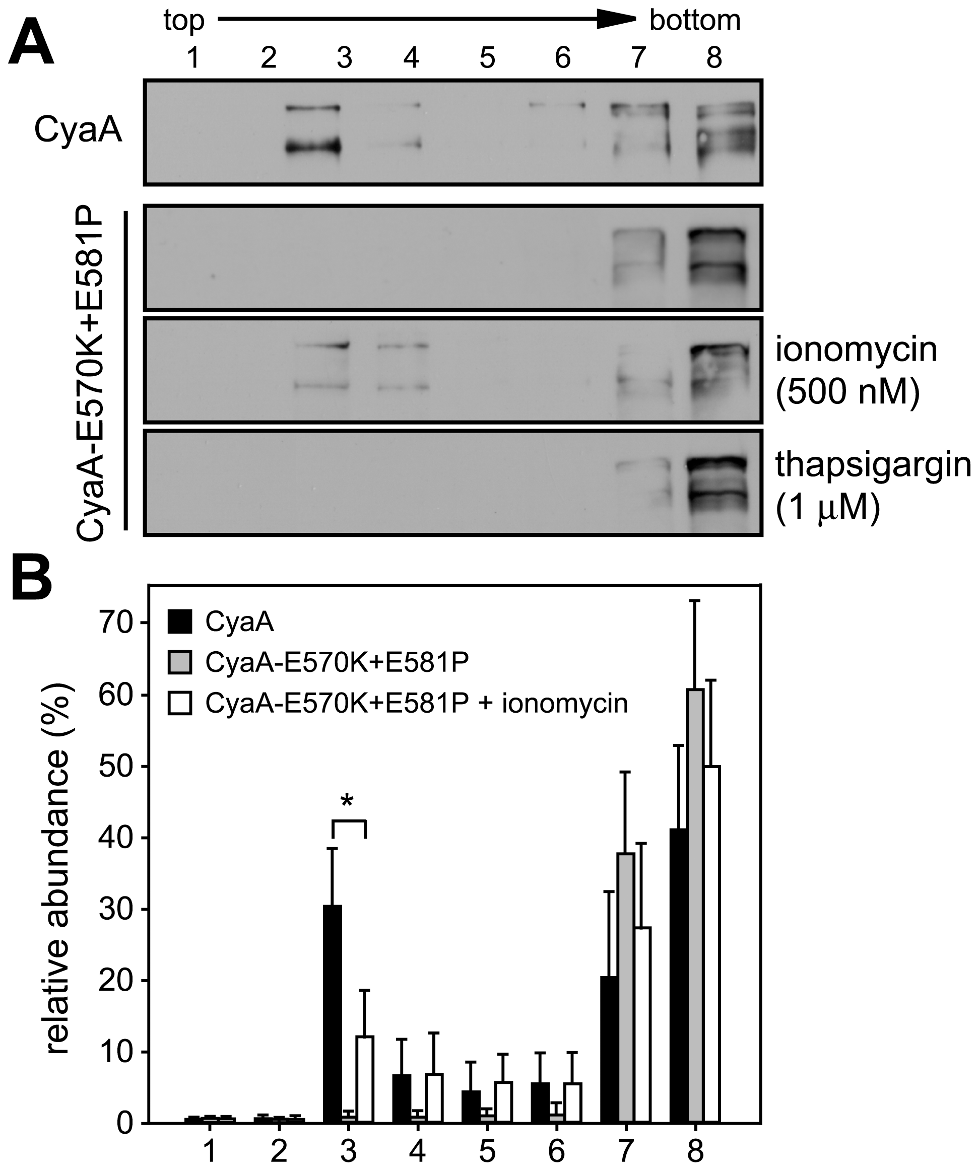 Mobilization of CyaA into lipid rafts depends on influx of extracellular Ca<sup>2+</sup> ions into cells.