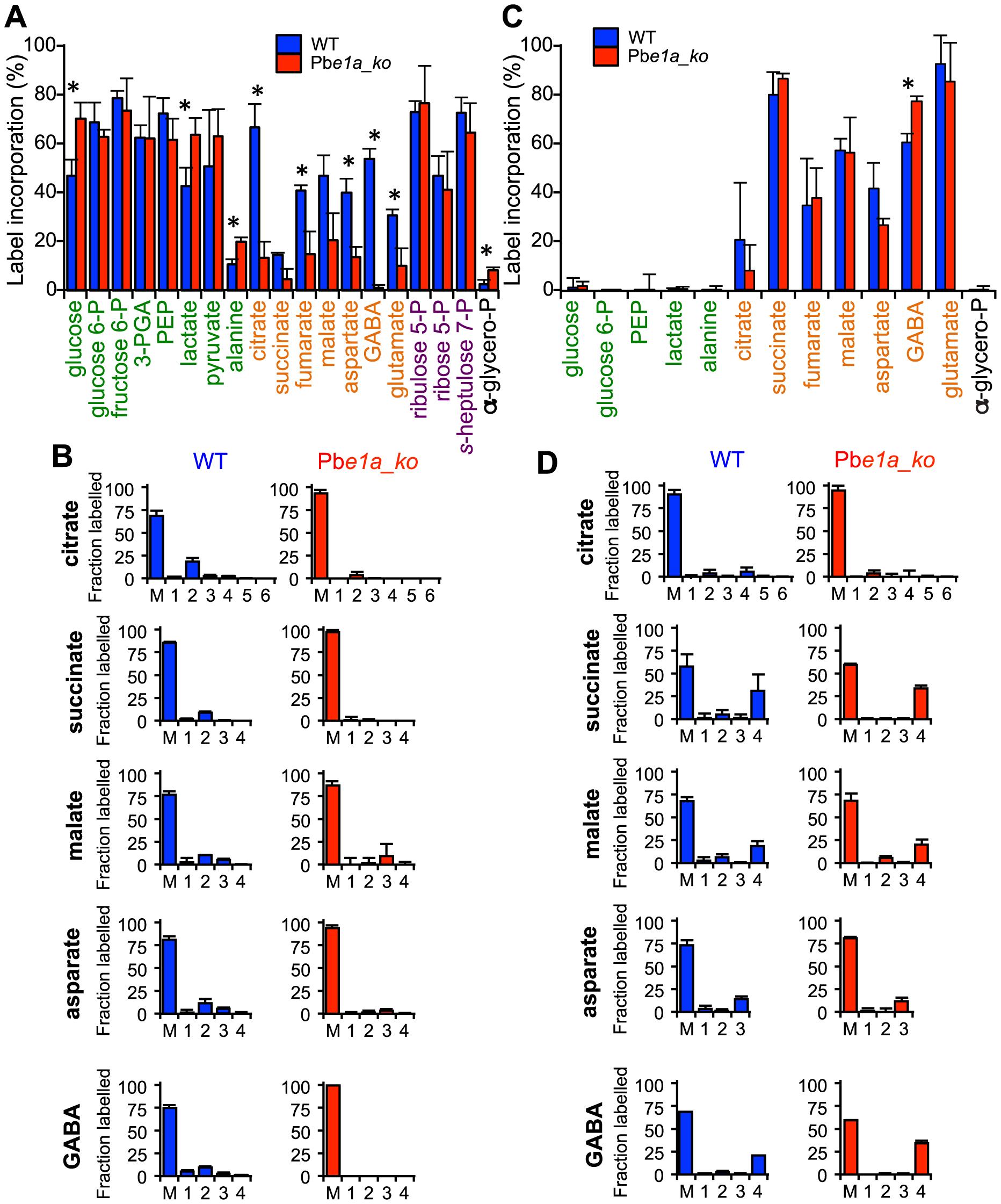 <i>P. berghei</i> parasites lacking the BCKDH-E1a subunit exhibit a perturbed TCA cycle.