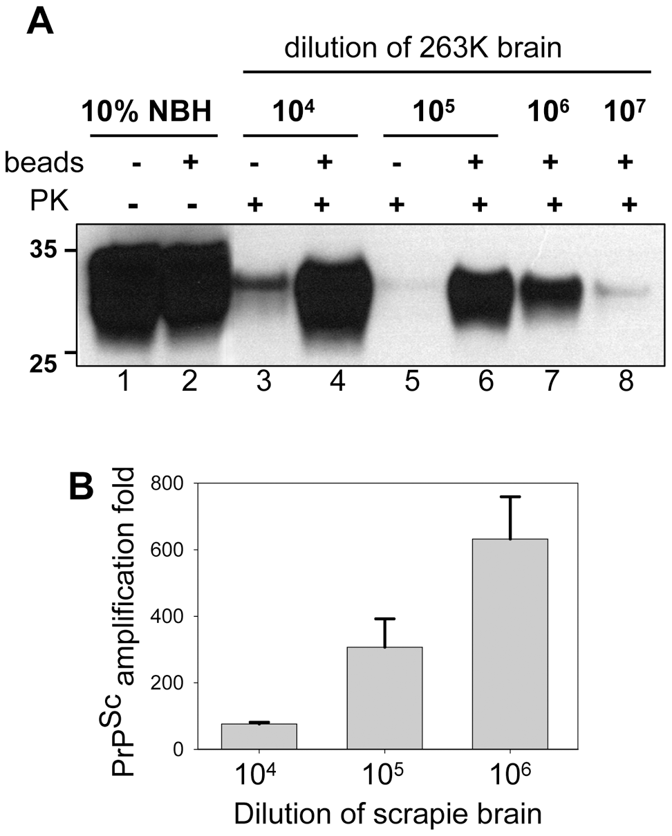 Beads improve the sensitivity of PrP<sup>Sc</sup> detection.