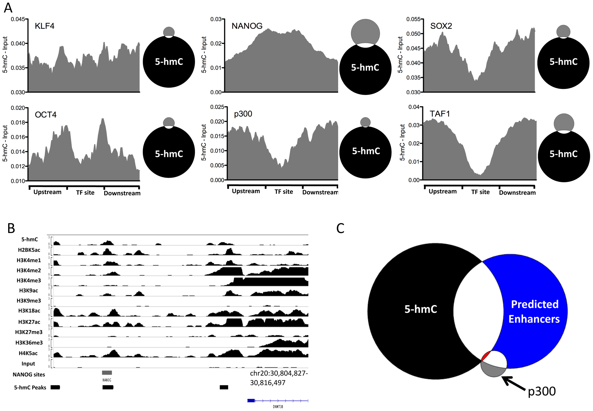 5-hmC at pluripotency-associated core transcription factor binding sites in human H1 ES cells.