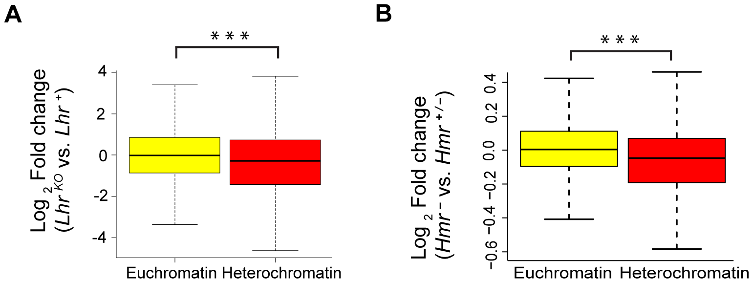Reduced expression of heterochromatic genes in <i>Lhr</i> and <i>Hmr</i> mutants.