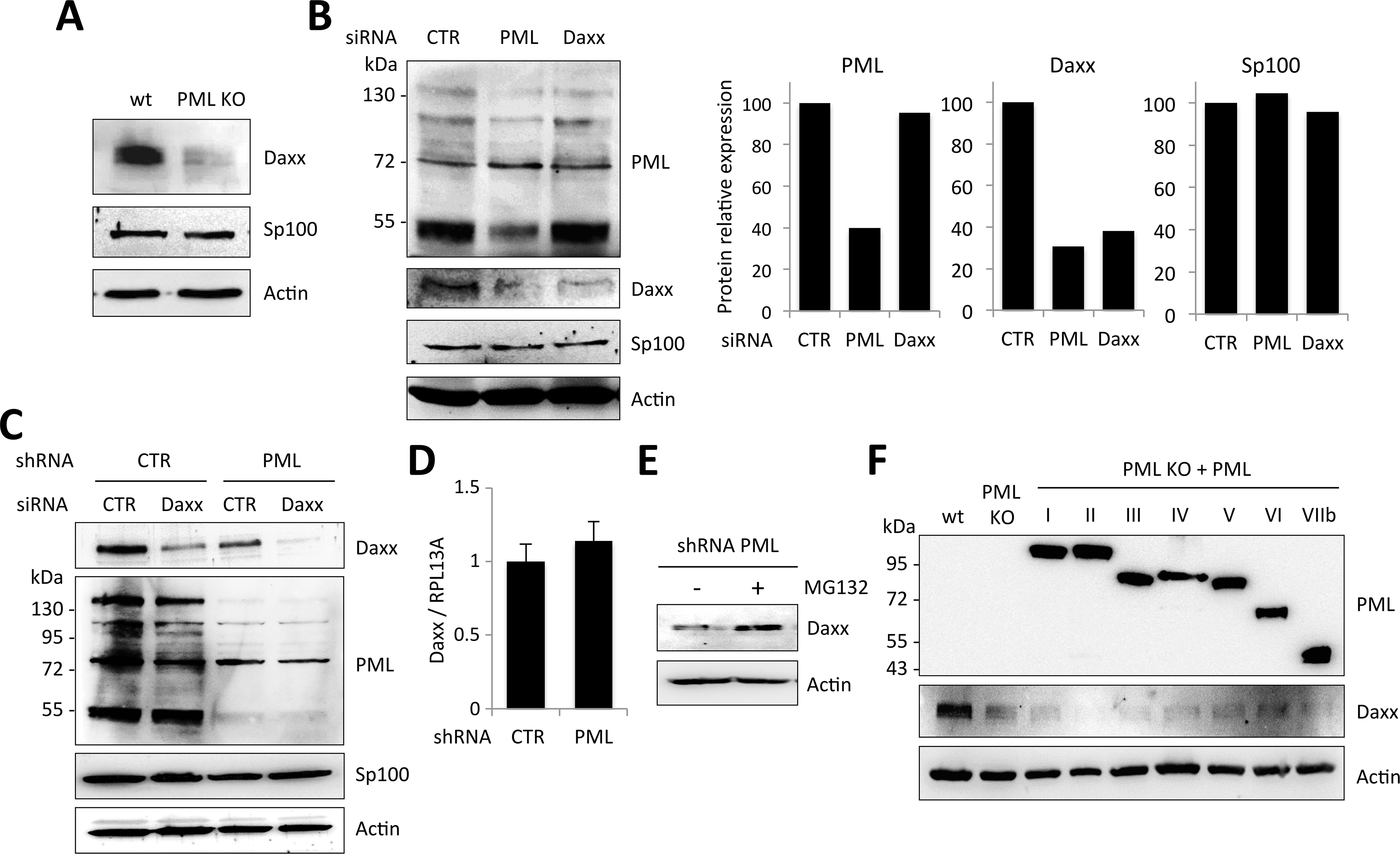 PML expression is required for Daxx stability.